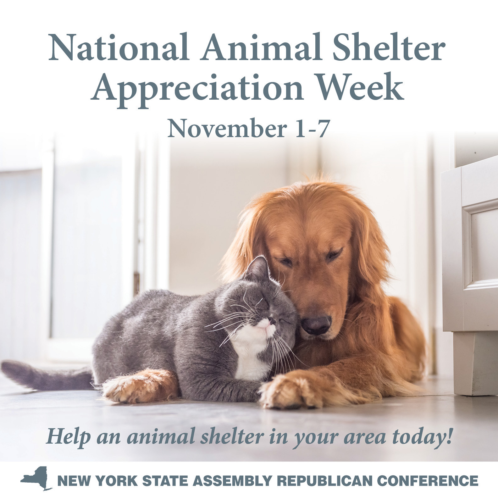 animal_Shelter_Week_11-1-7-2020.jpg