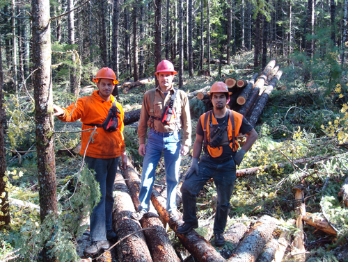 forest-management.jpg