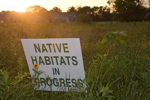 Native Habitats in Progress