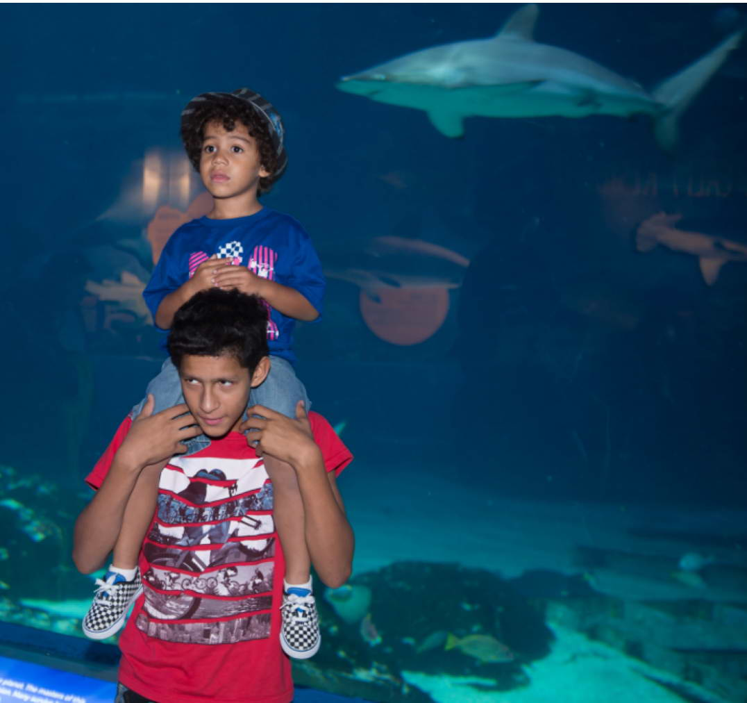 kids_and_sharks.jpg
