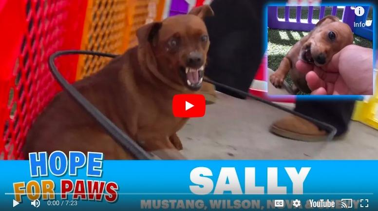 Sally-Alert.jpg