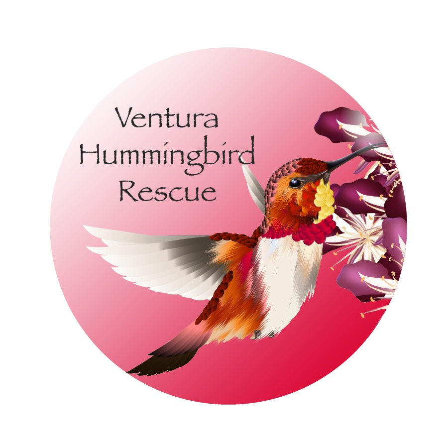 Ventura-Hummingbird-Rescue