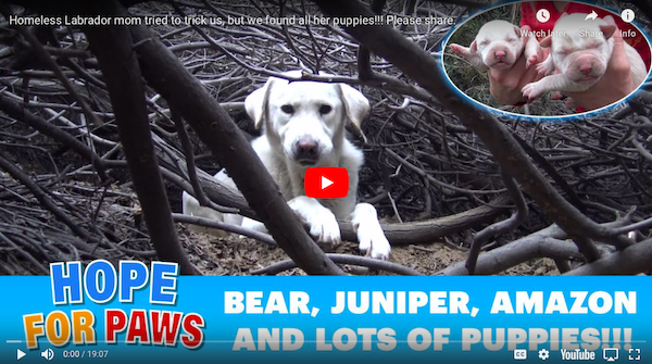 Read latest animal rescue stories from Hope For Paws