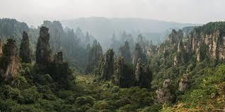 china_forest.jpeg