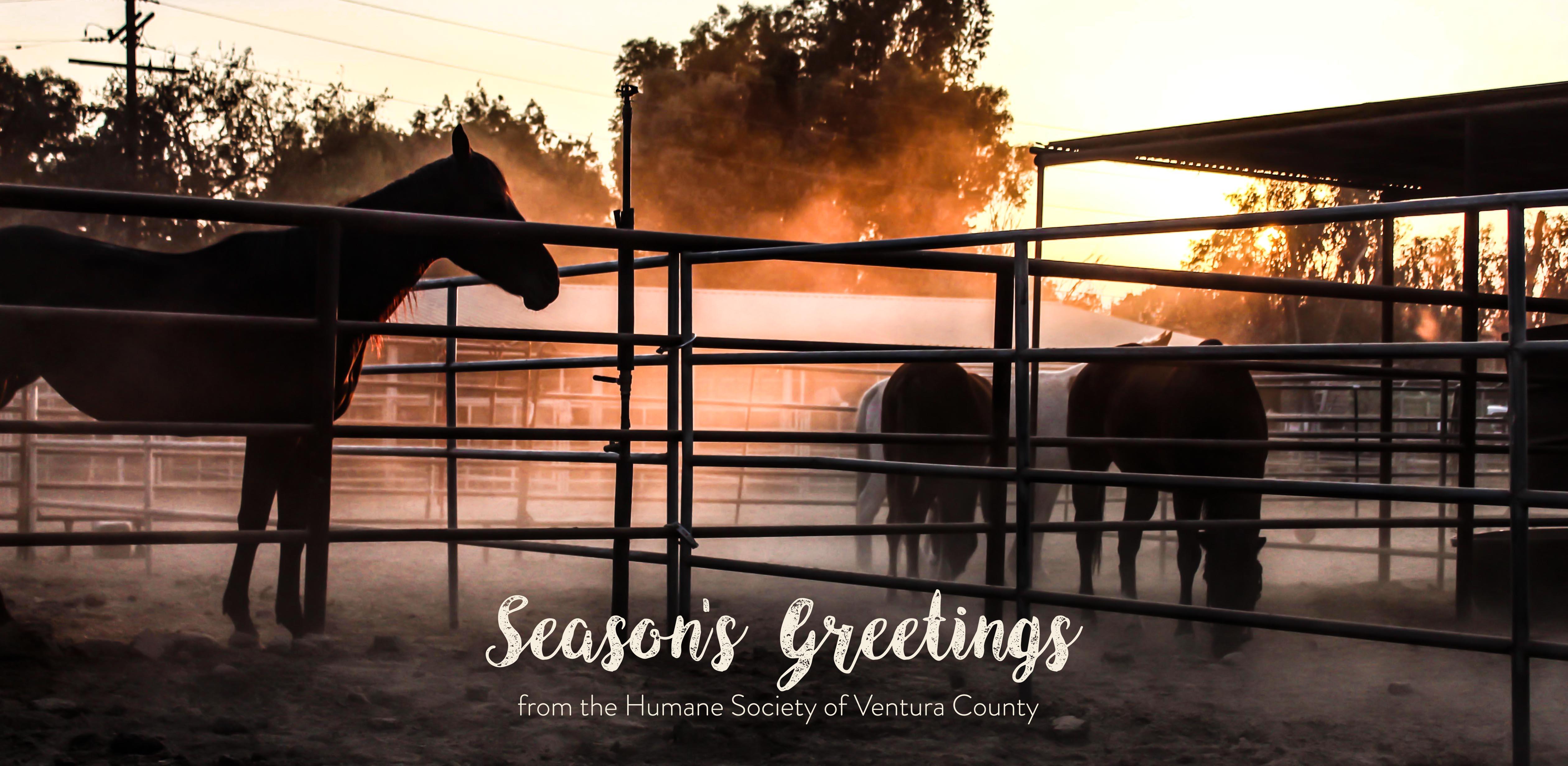 seasons.greetings.jpg