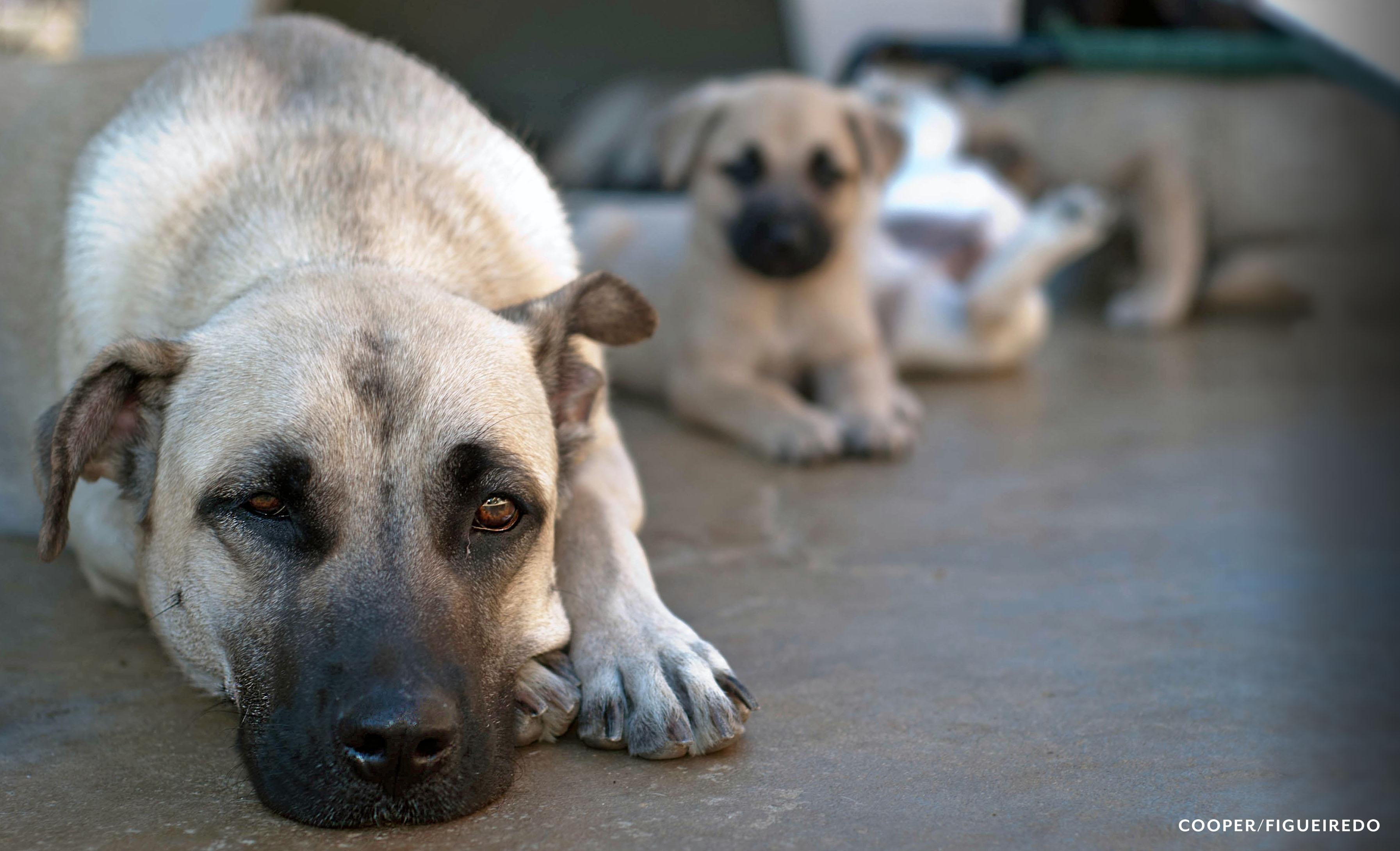 reba.puppies.jpg