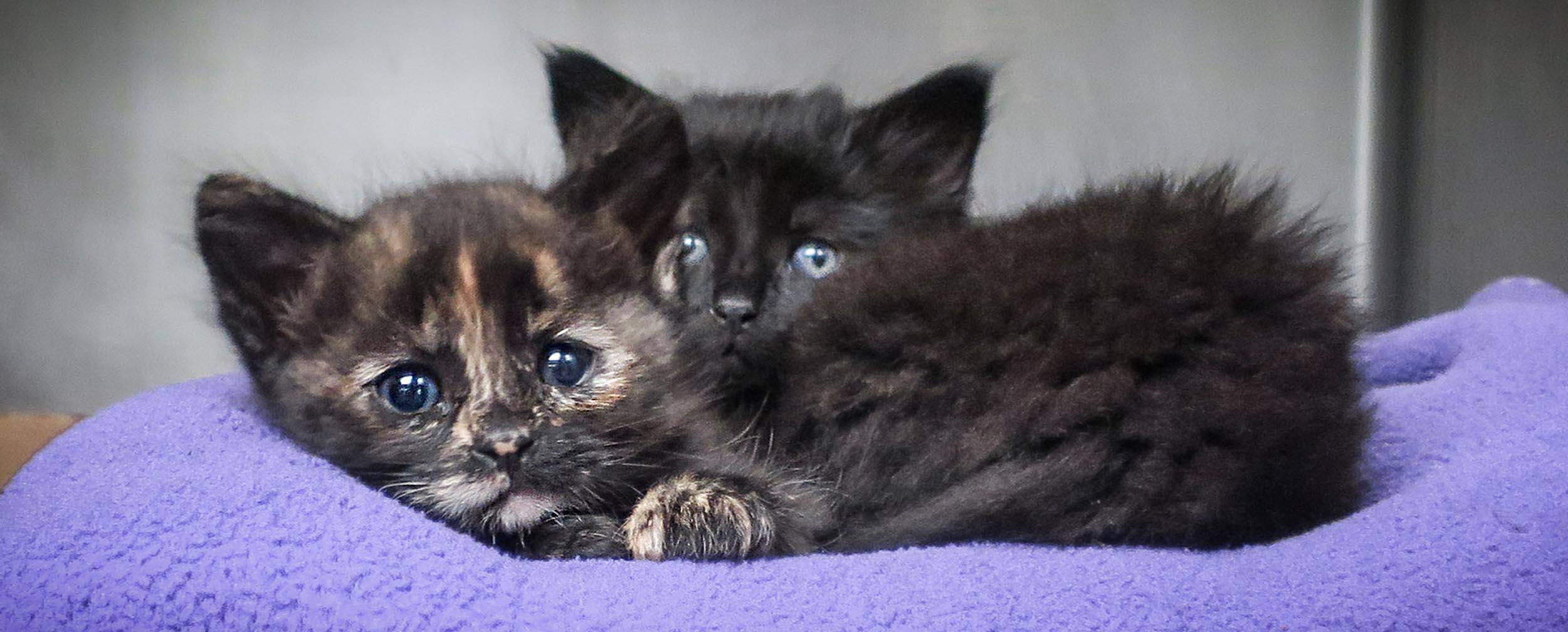 kittens.617.jpg
