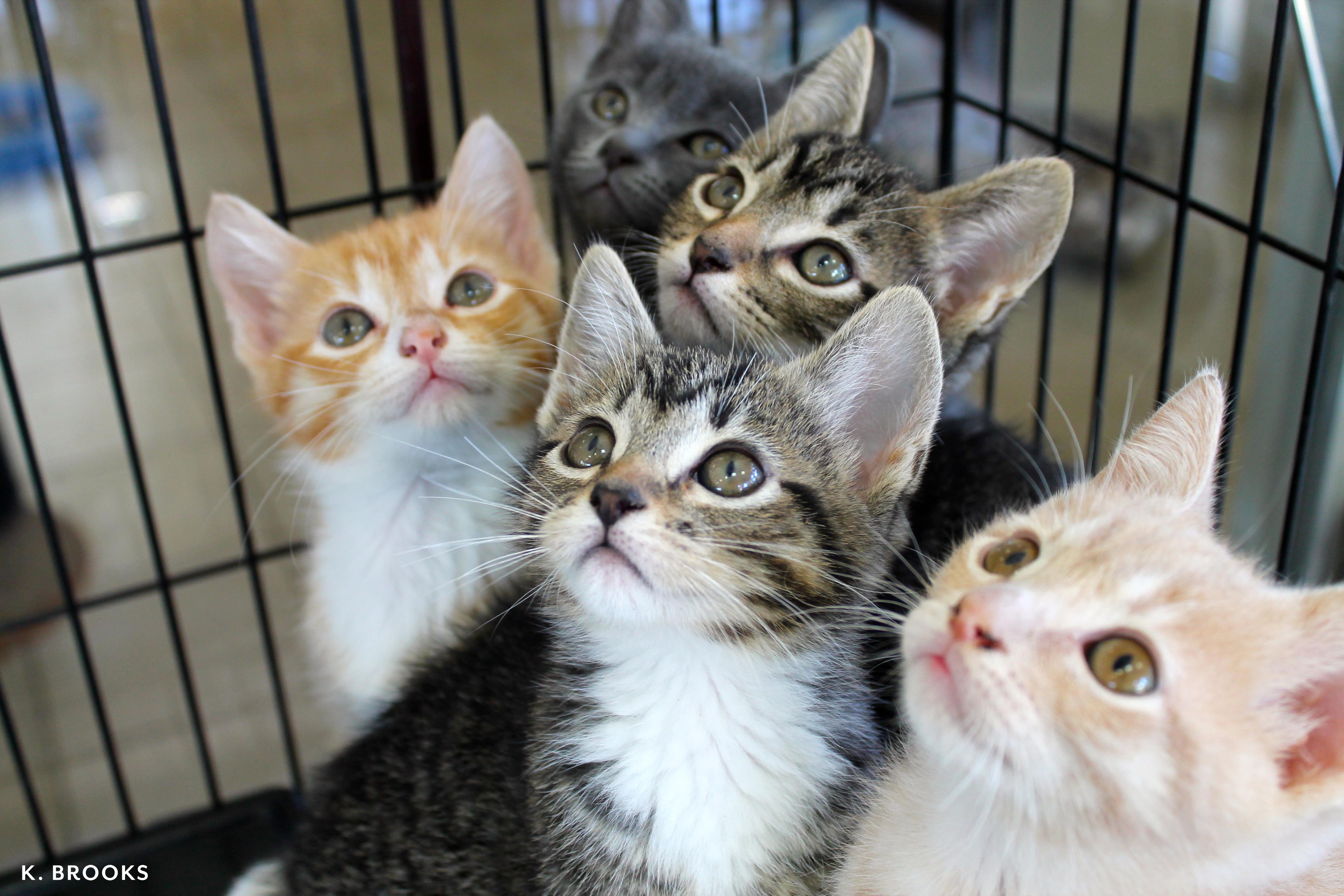 kittens!!!!.jpg