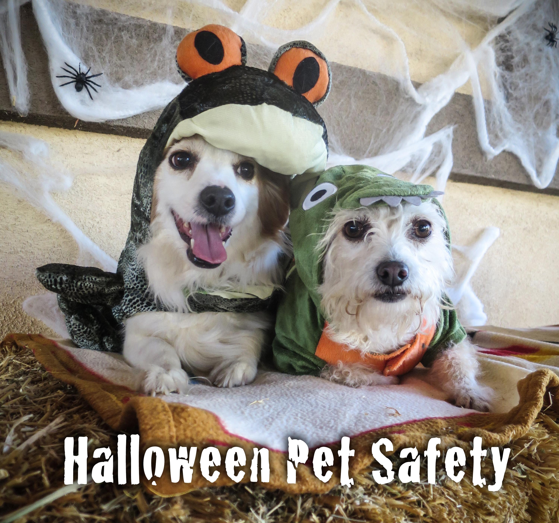 halloween.pet.safety.square.jpg