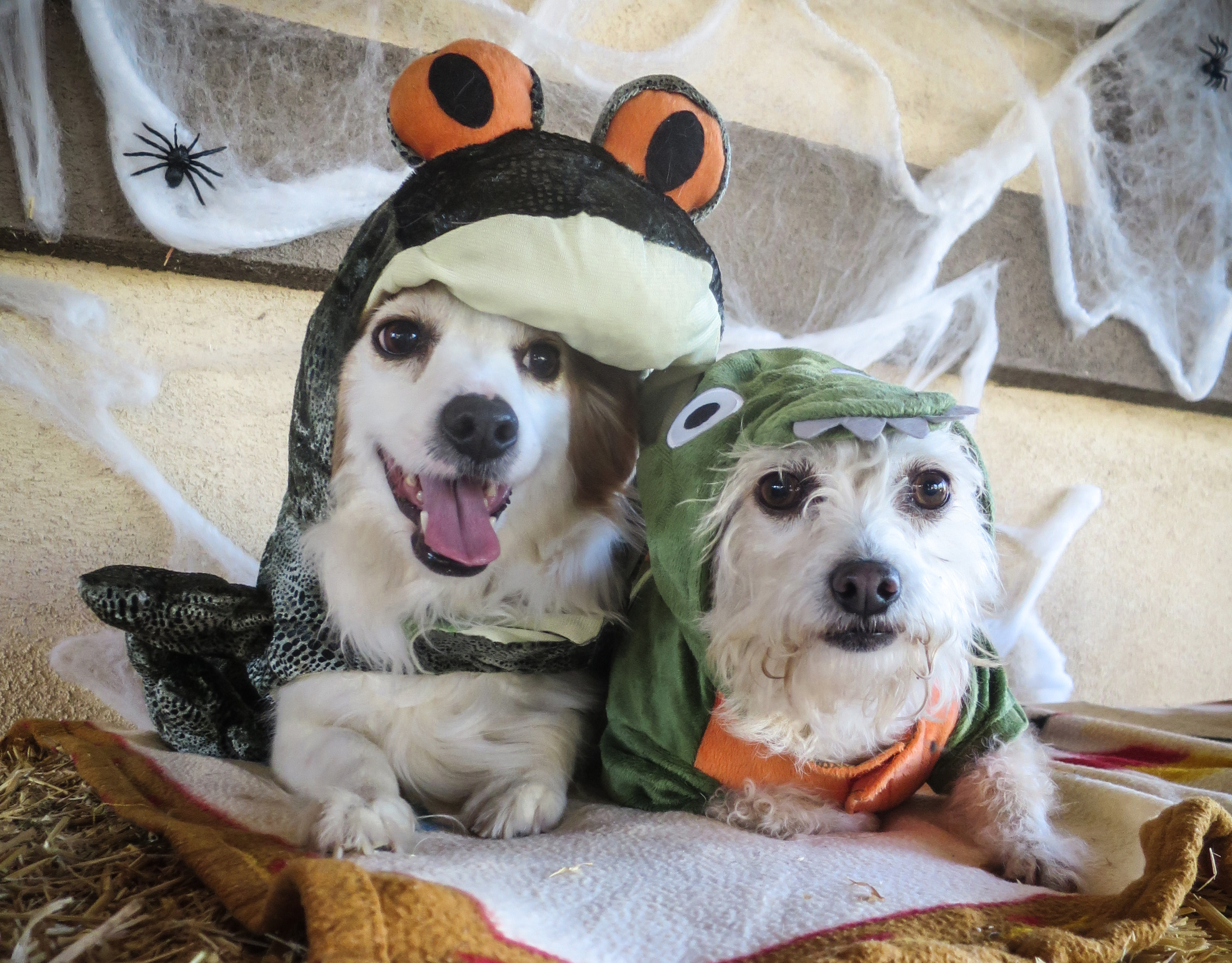 Halloween Pet Safety - Humane Society of Ventura County
