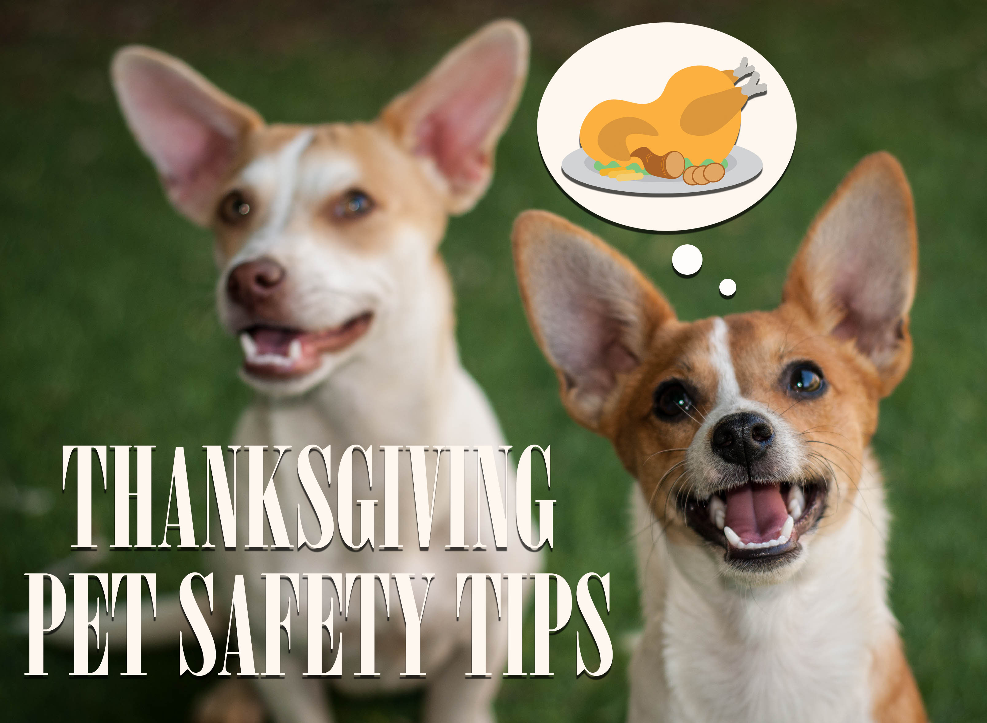 thanksgiving.pet.safety.jpg