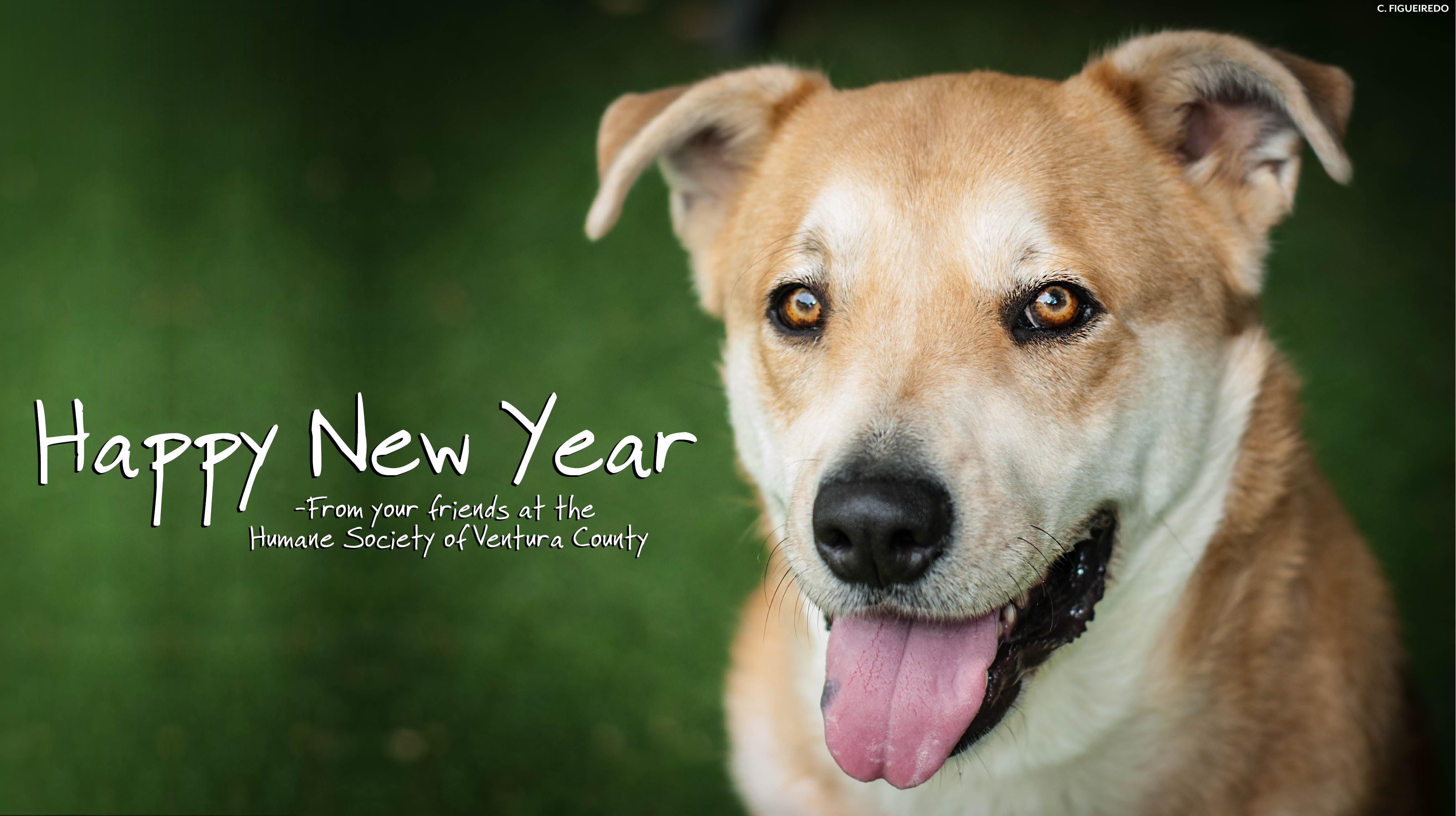 happy.new.year.penny.jpg