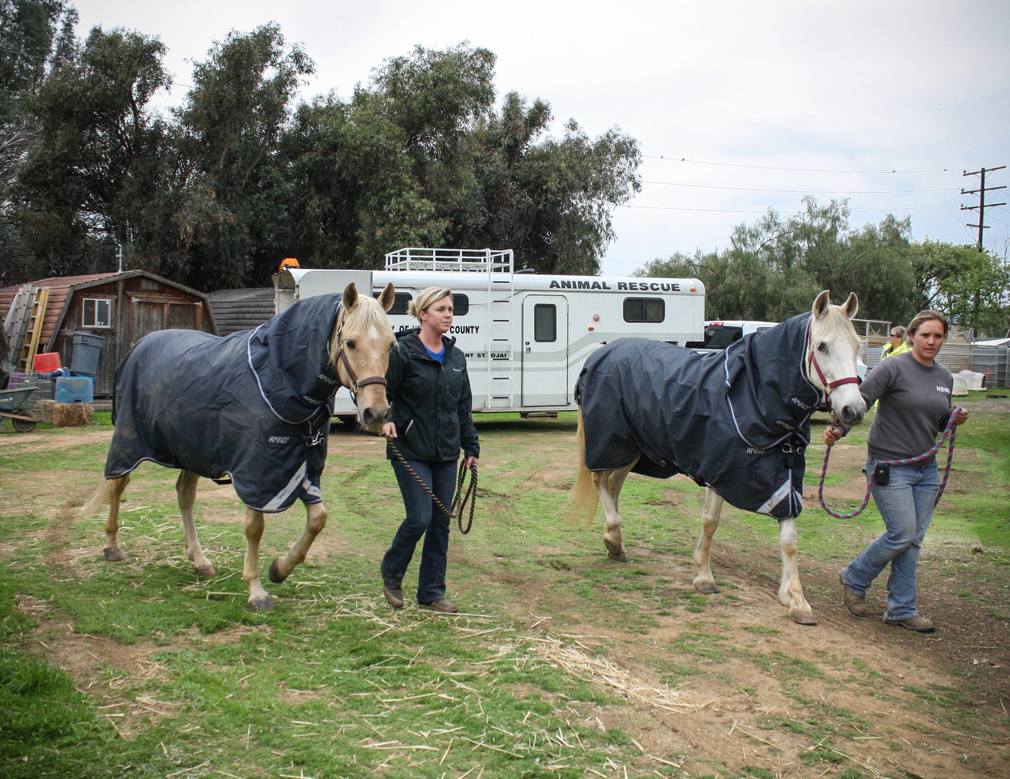 2.horse.evac.jpg