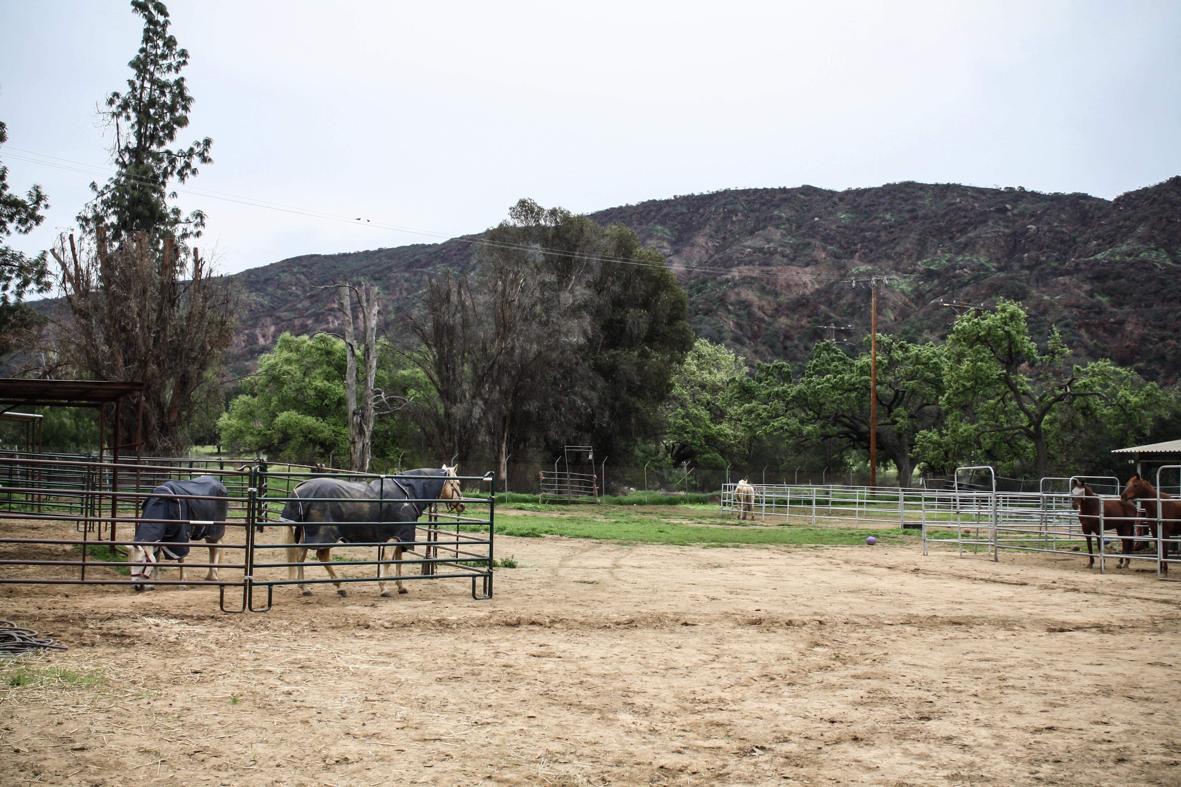 horse.corrals.jpg