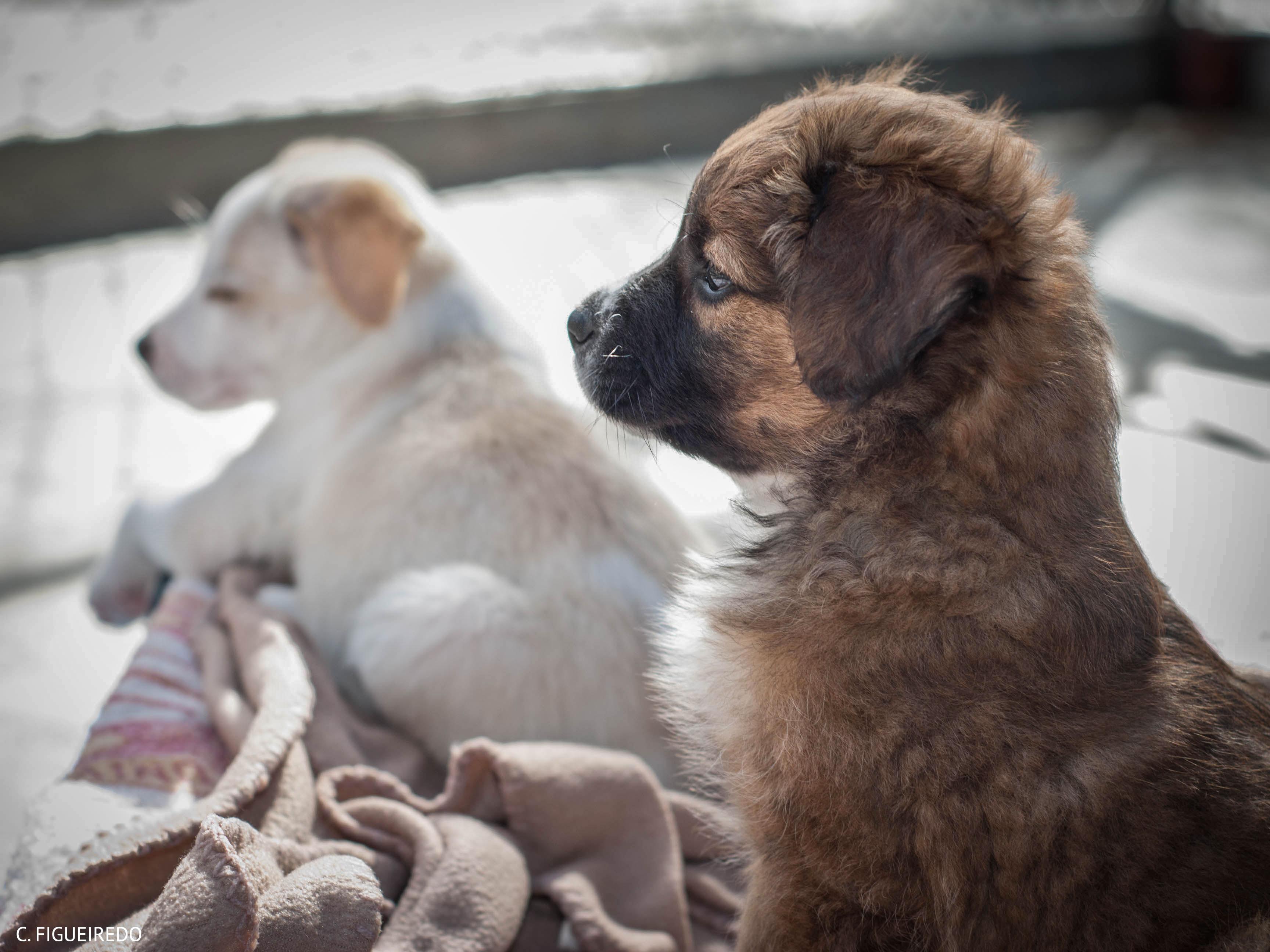 Puppies._cf.jpg