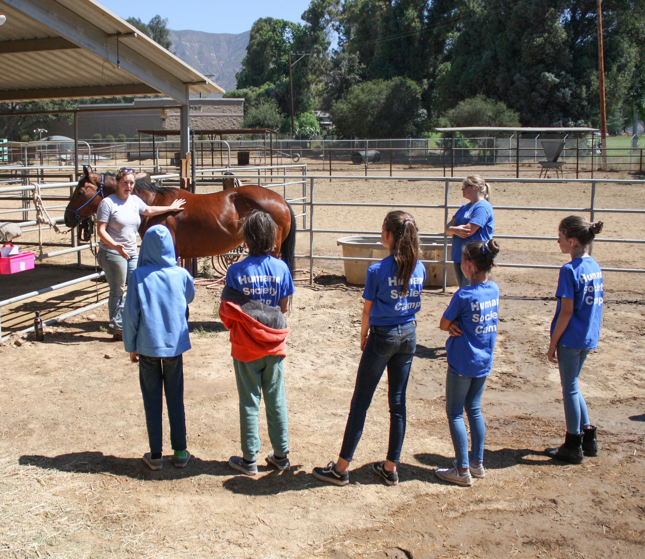 camper.horses.jpg