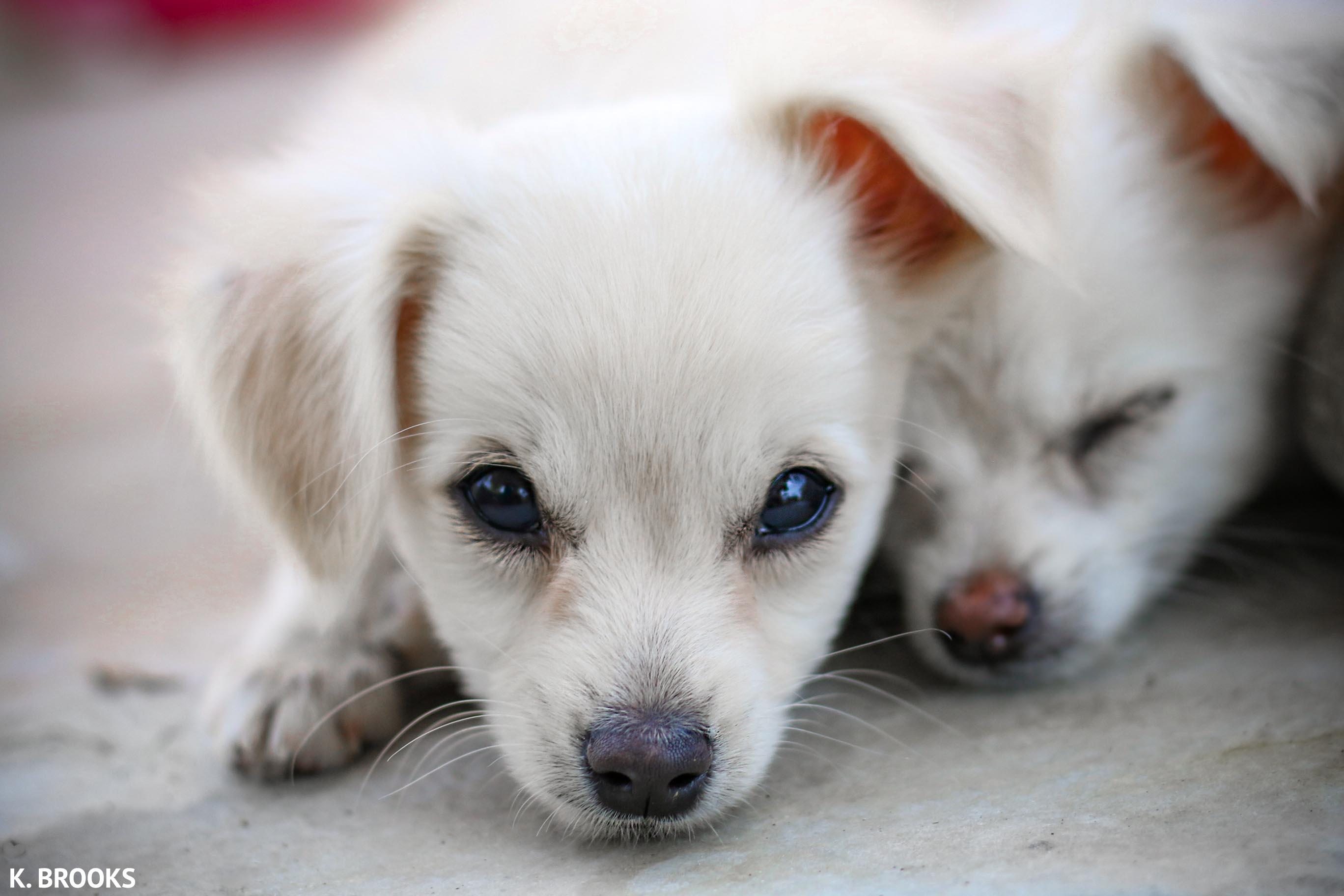 white.puppies.fdf.jpg