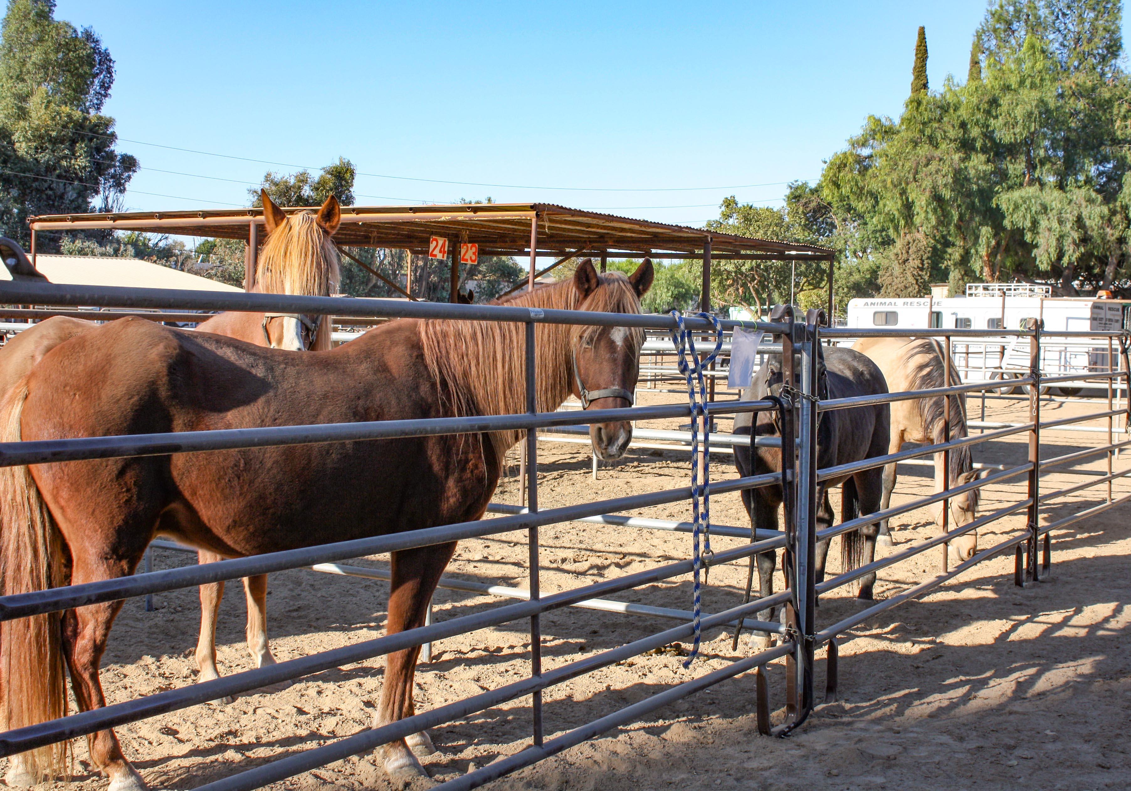 horses.1109.2..jpg
