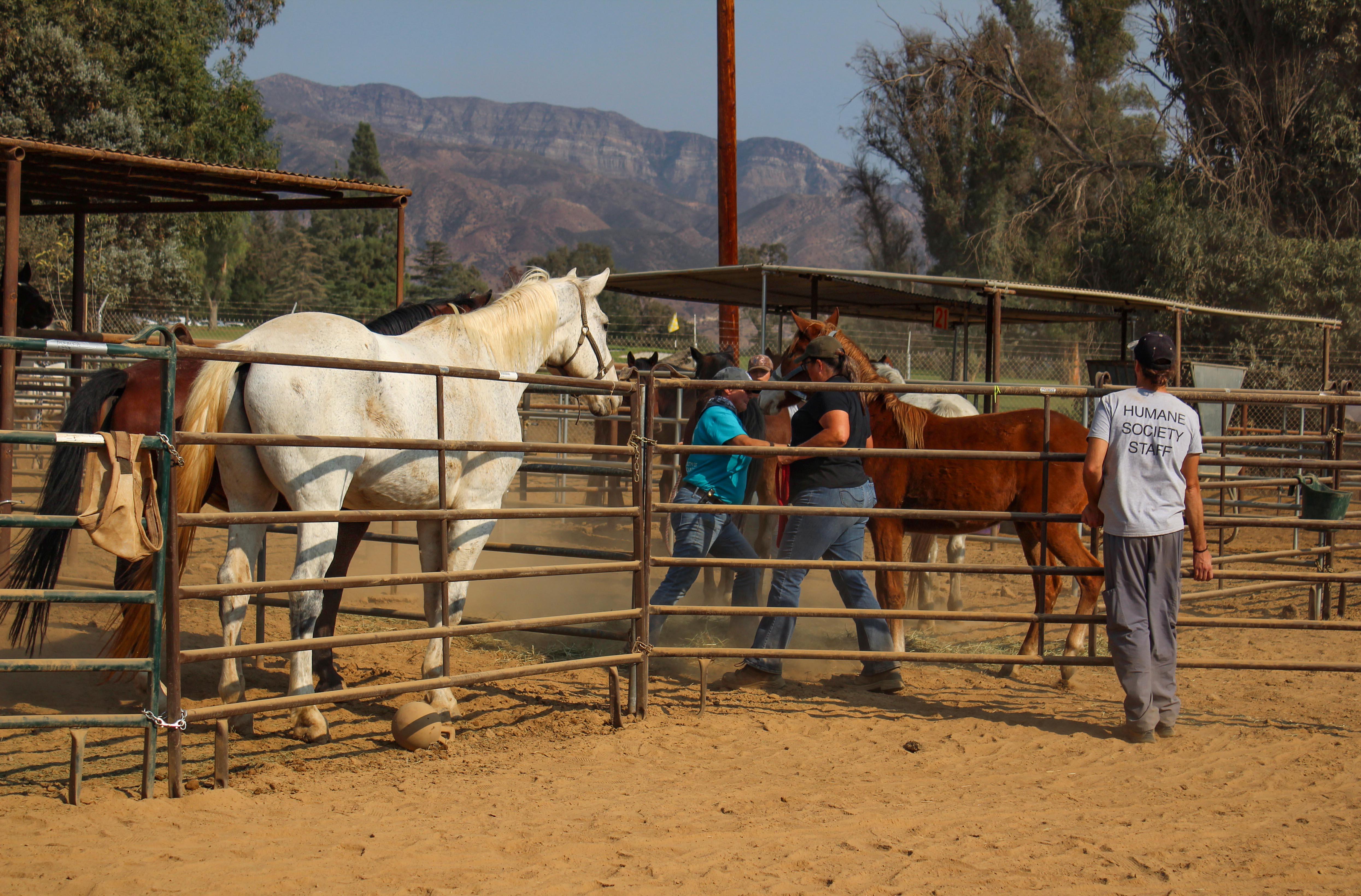 horses.vcas.jpg