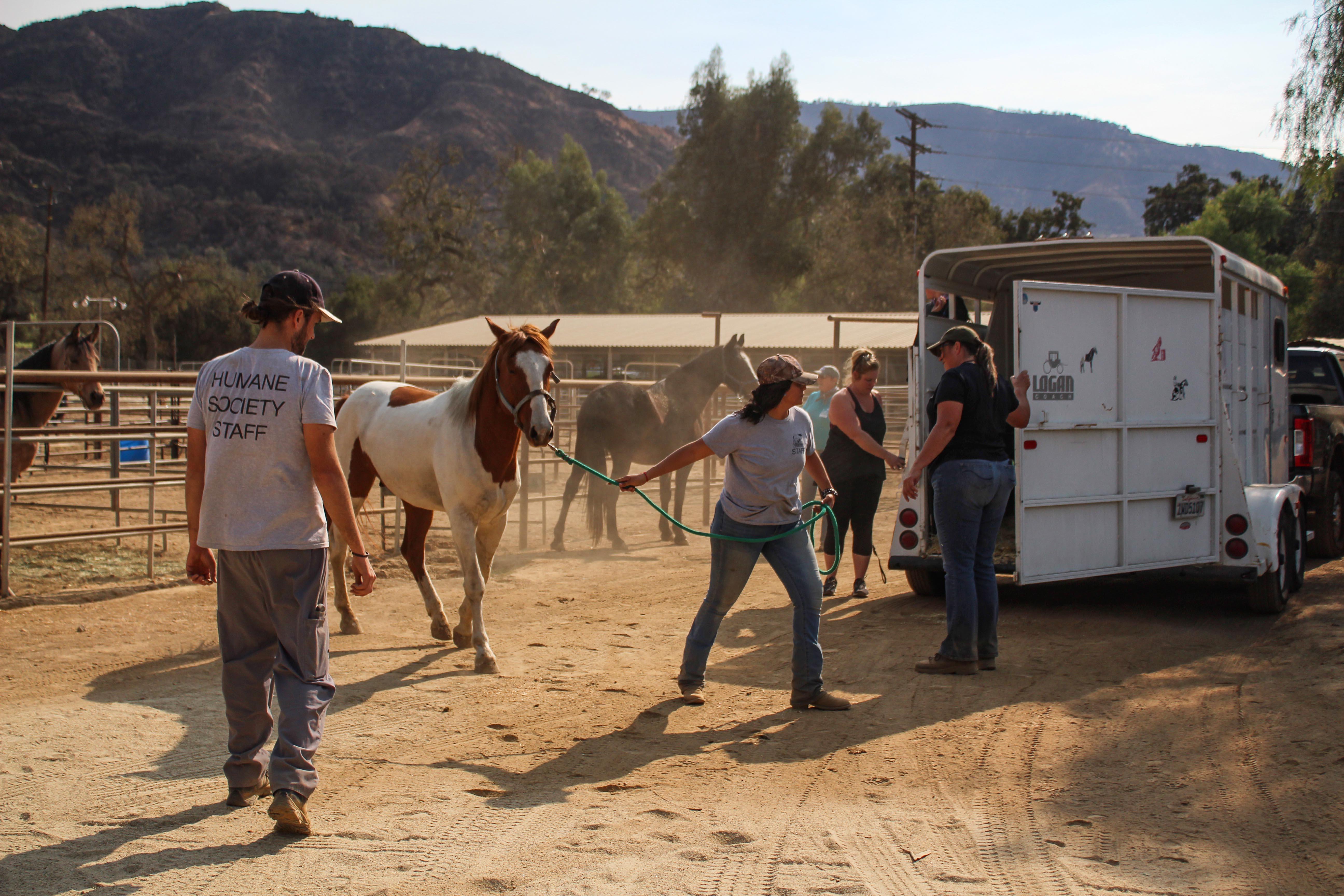Nat.horse.jpg