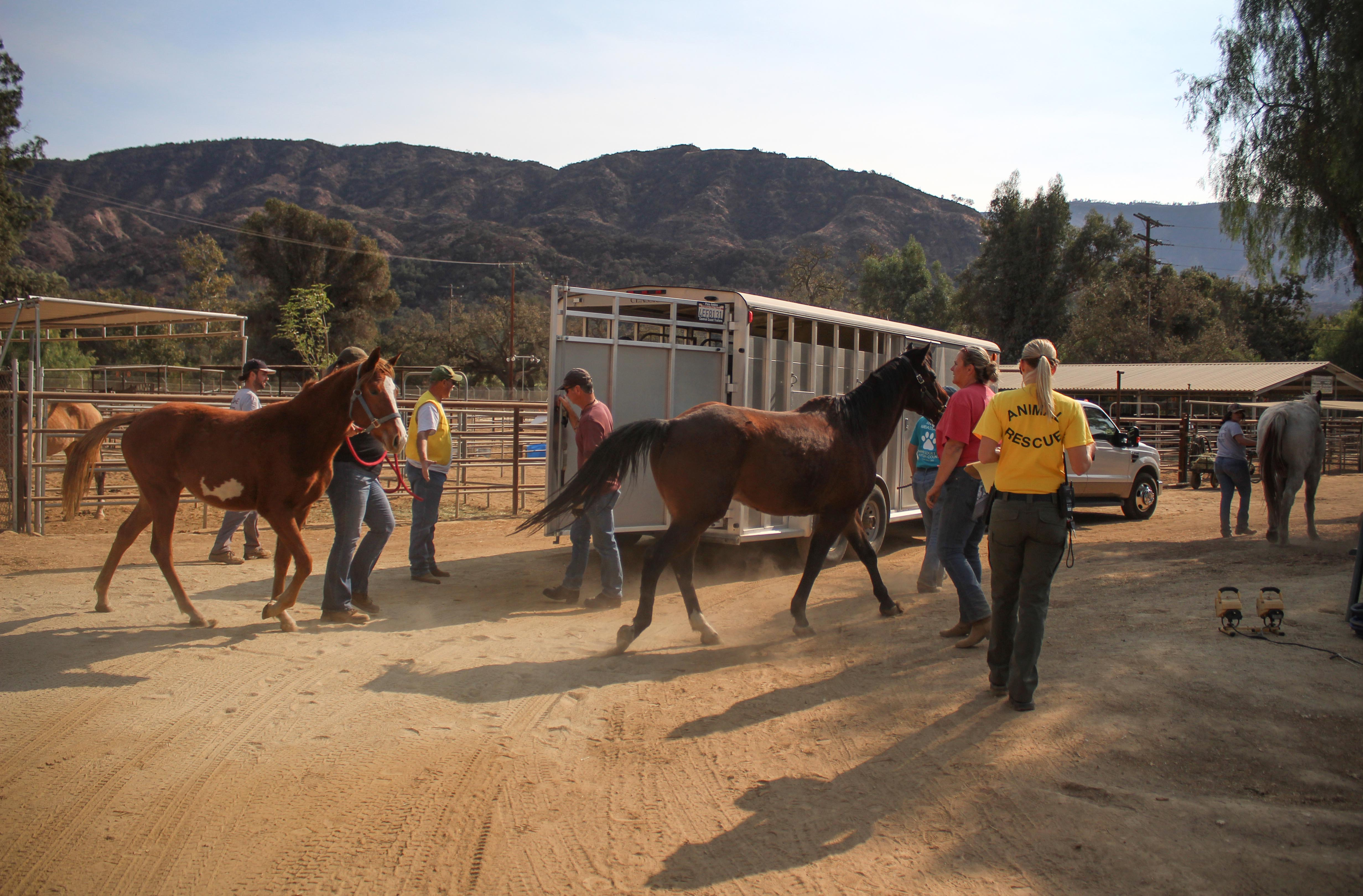 vcas.horses.3.jpg