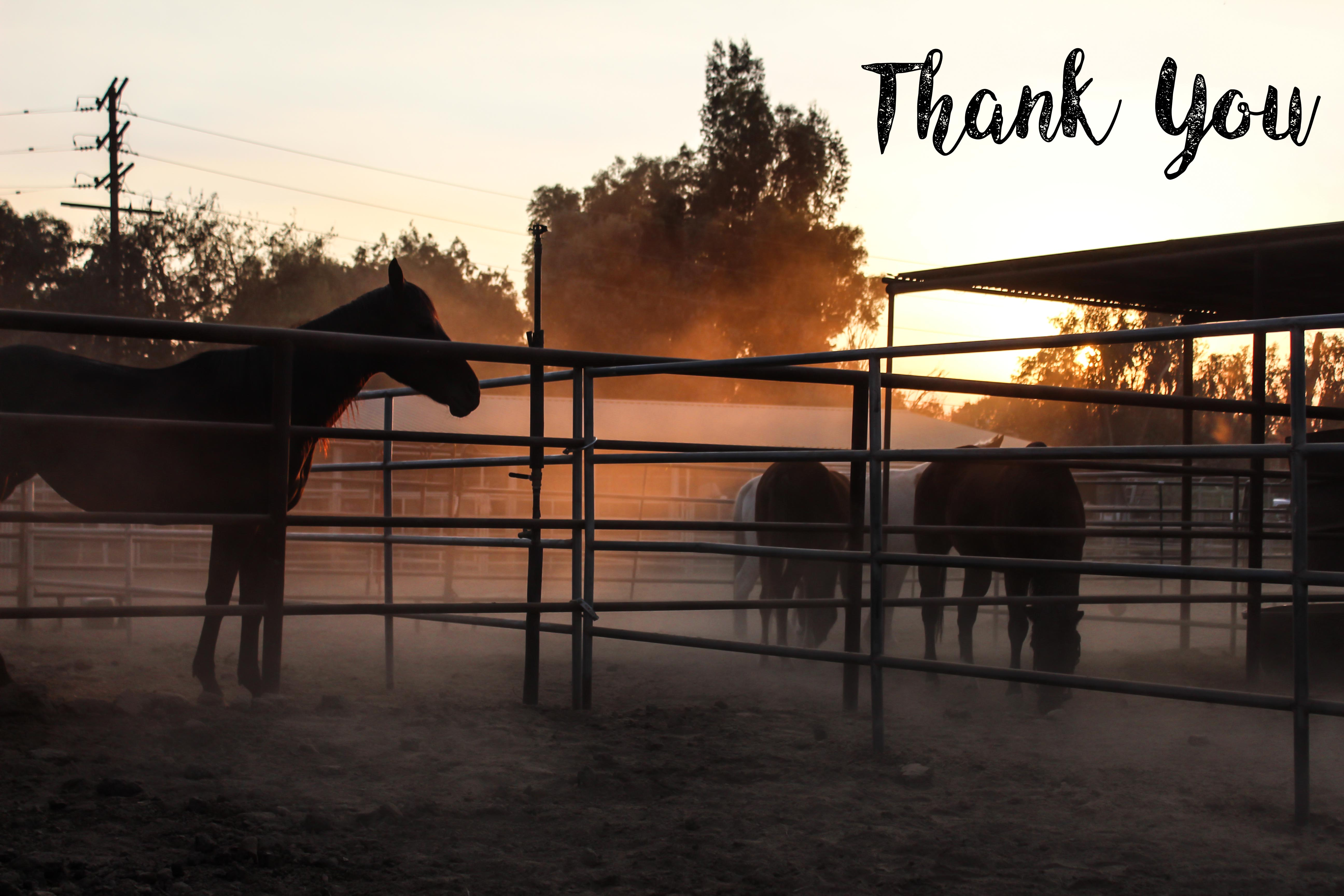 thank.you.horses.jpg