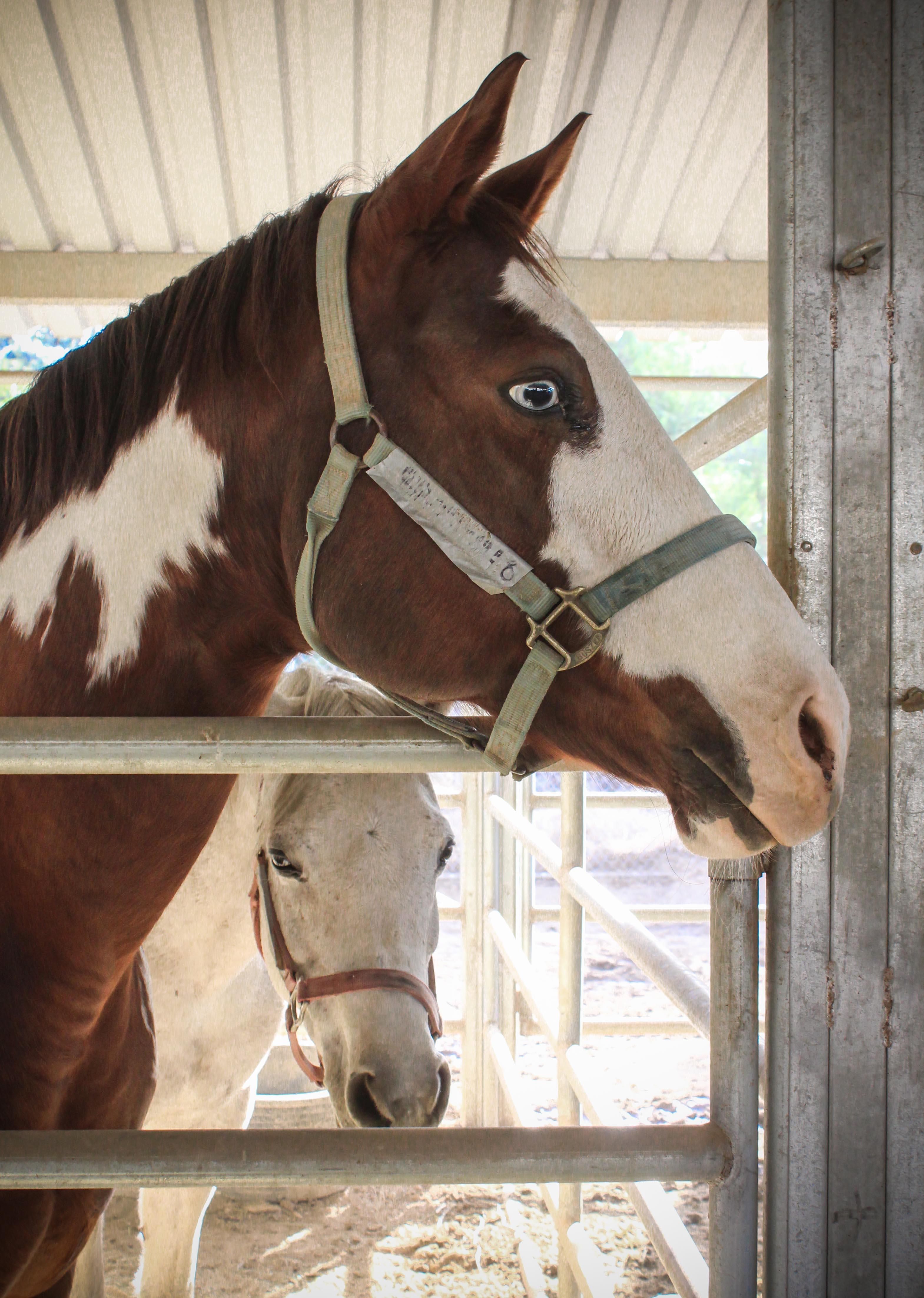 horse.face.jpg