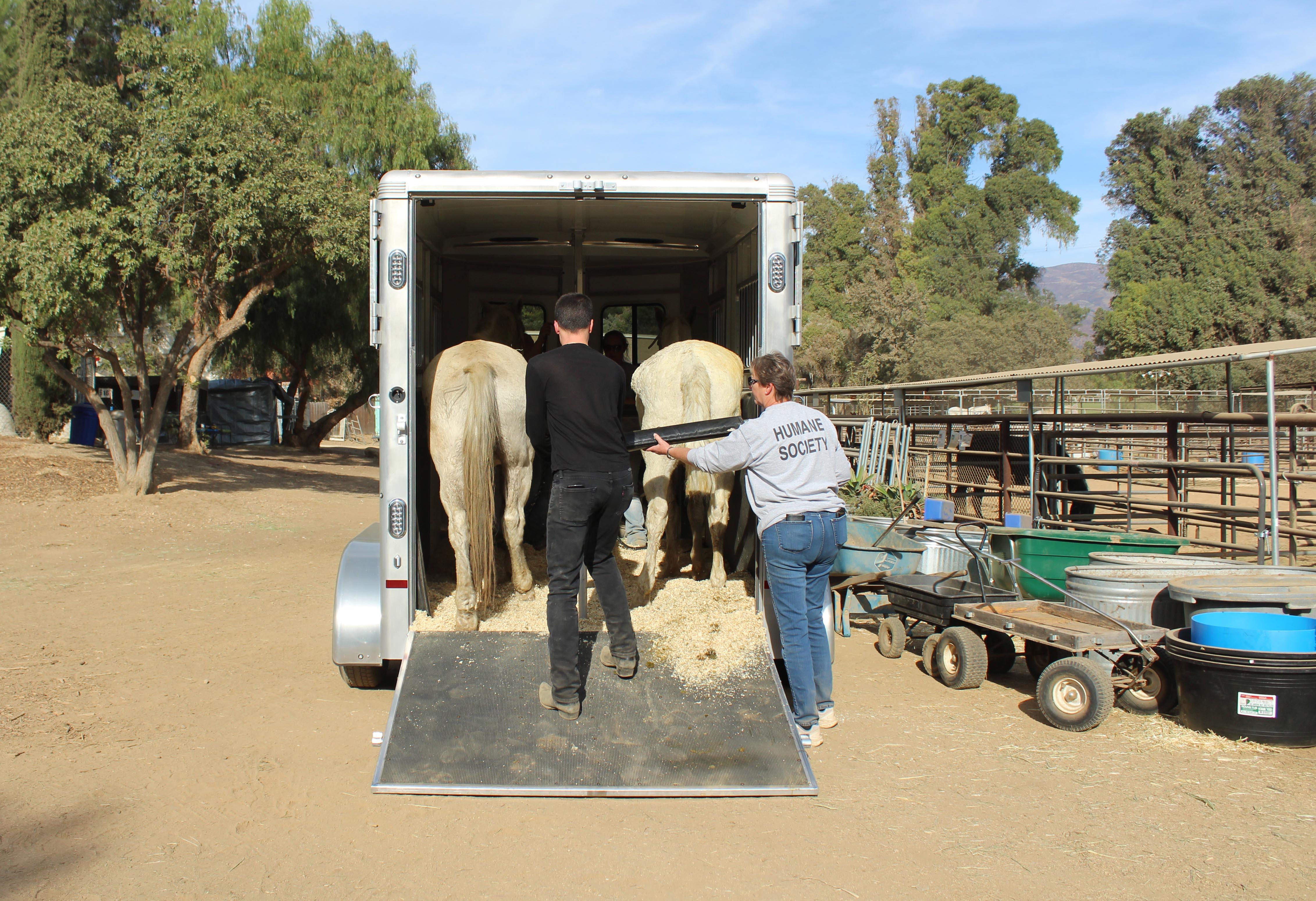 horses.trailer.jpg