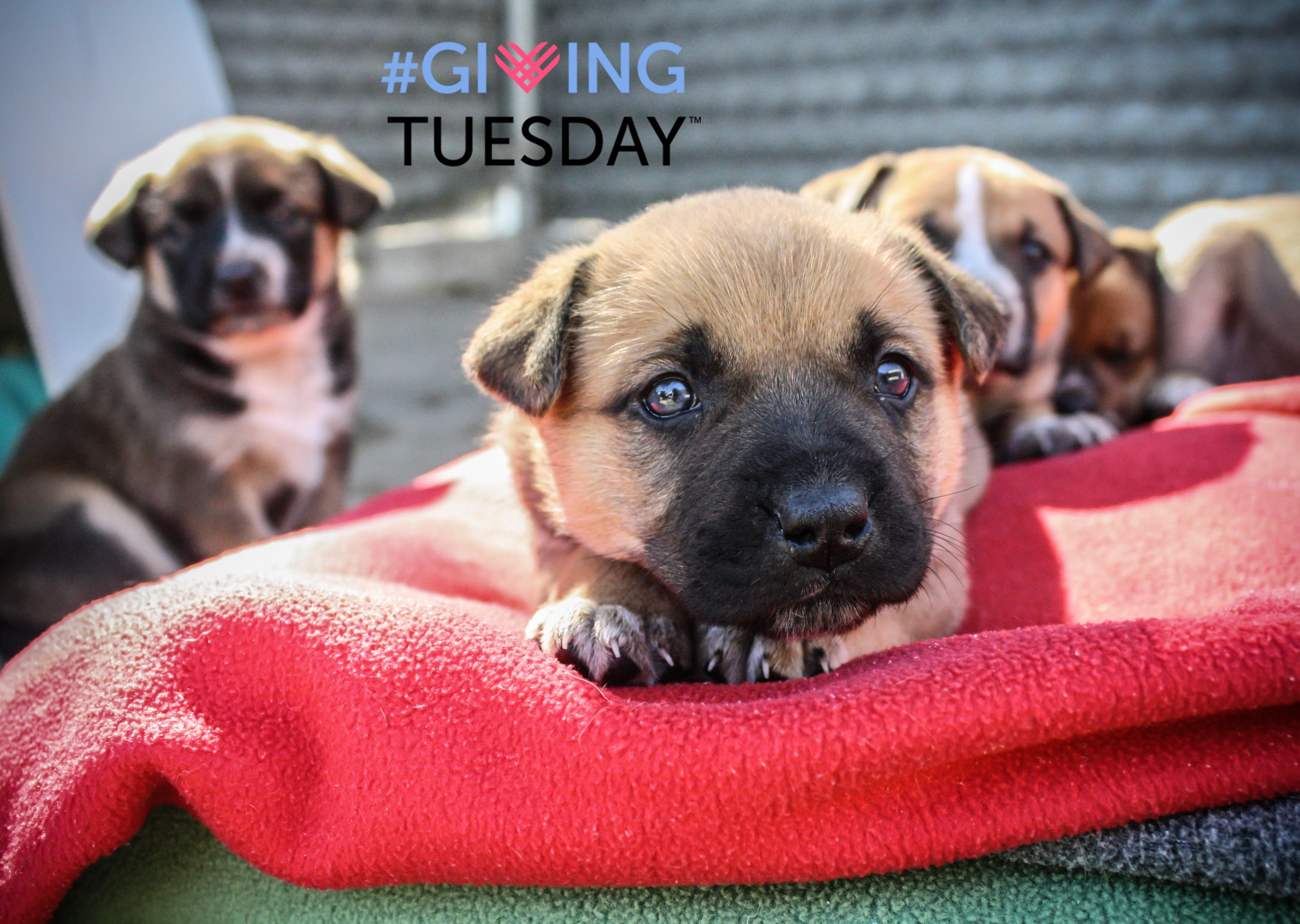 giving.tuesday.puppies.jpg