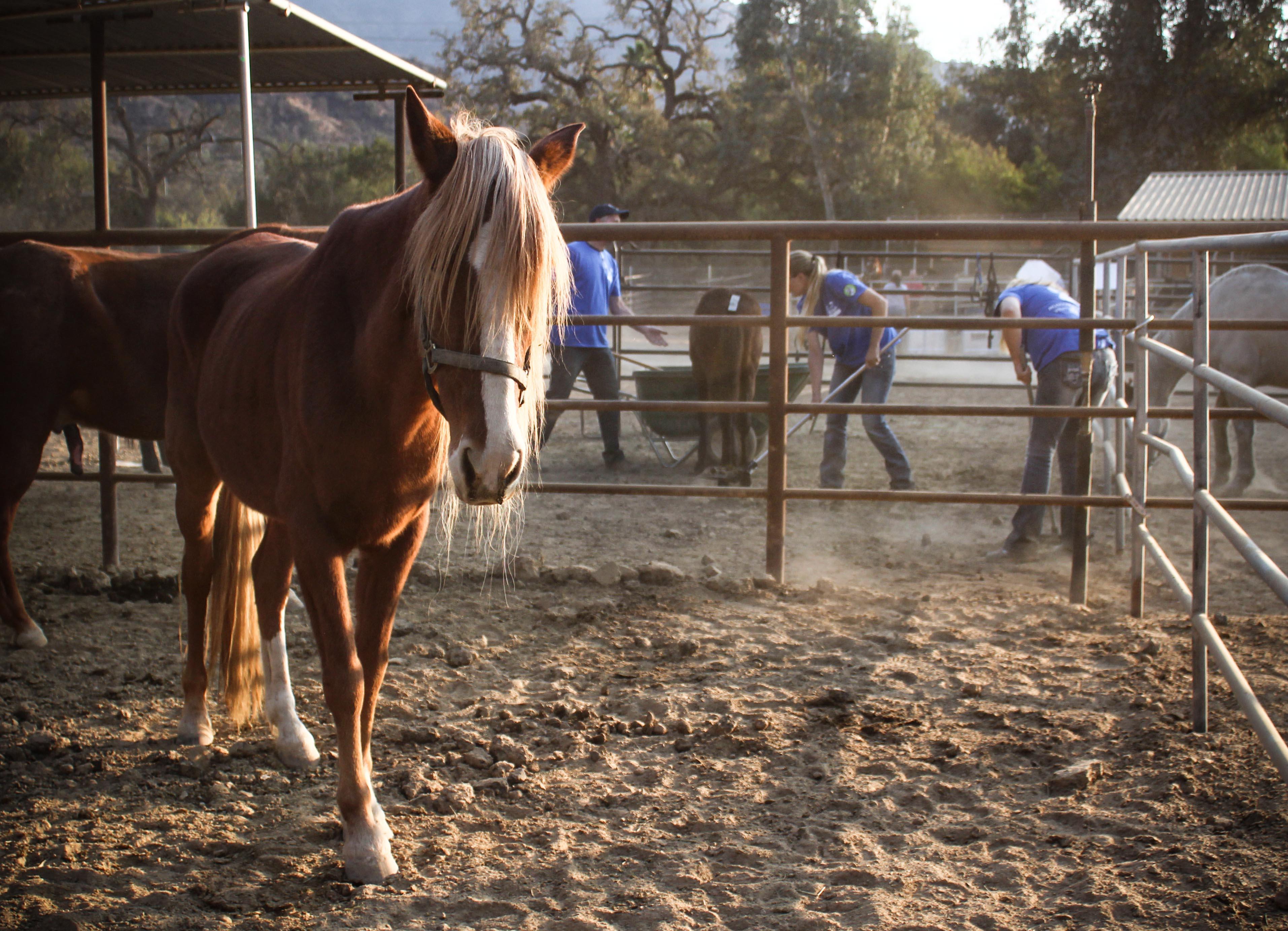volunteer.horse.jpg