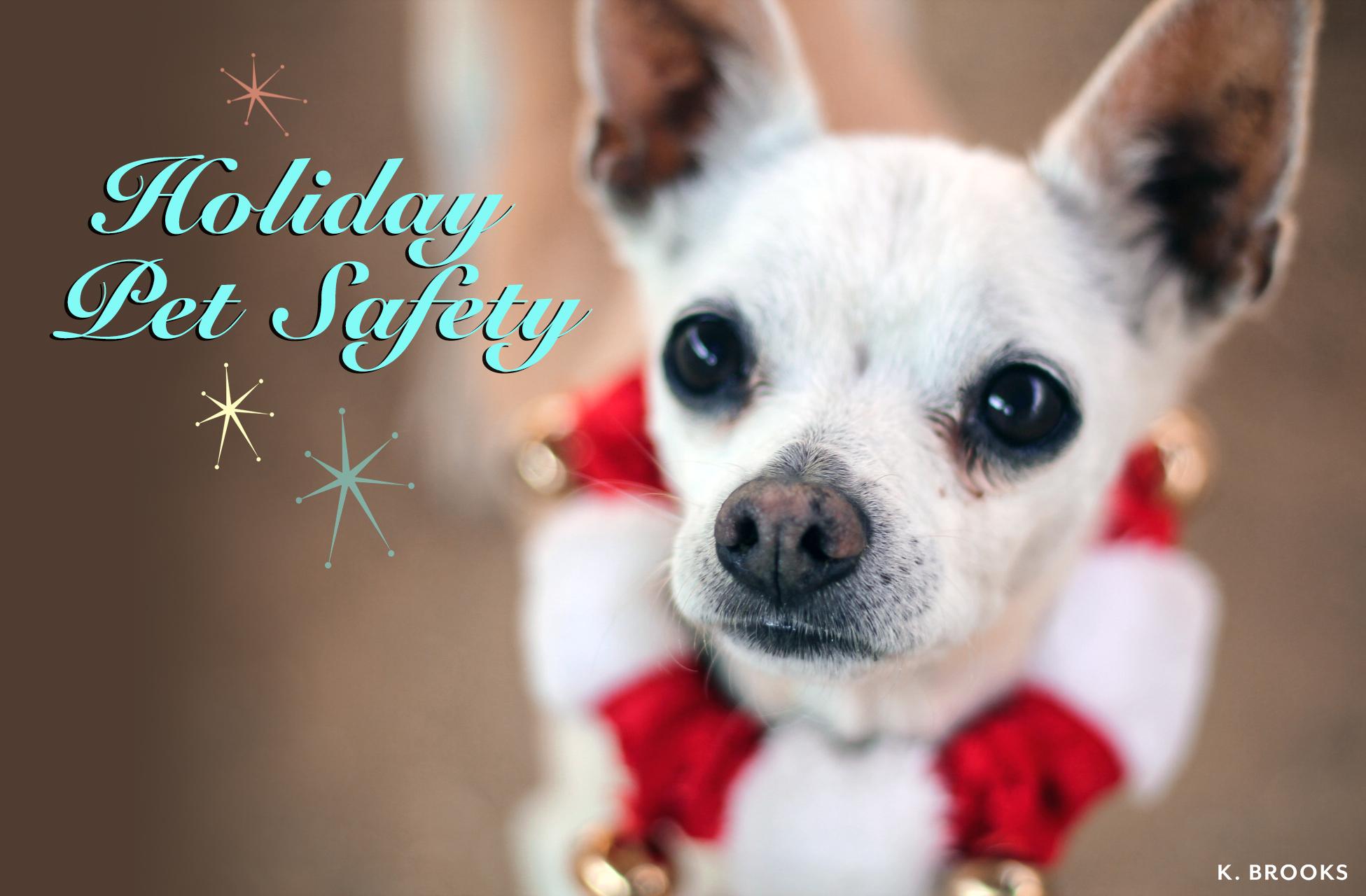 holiday.pet.safety.mogie.jpg