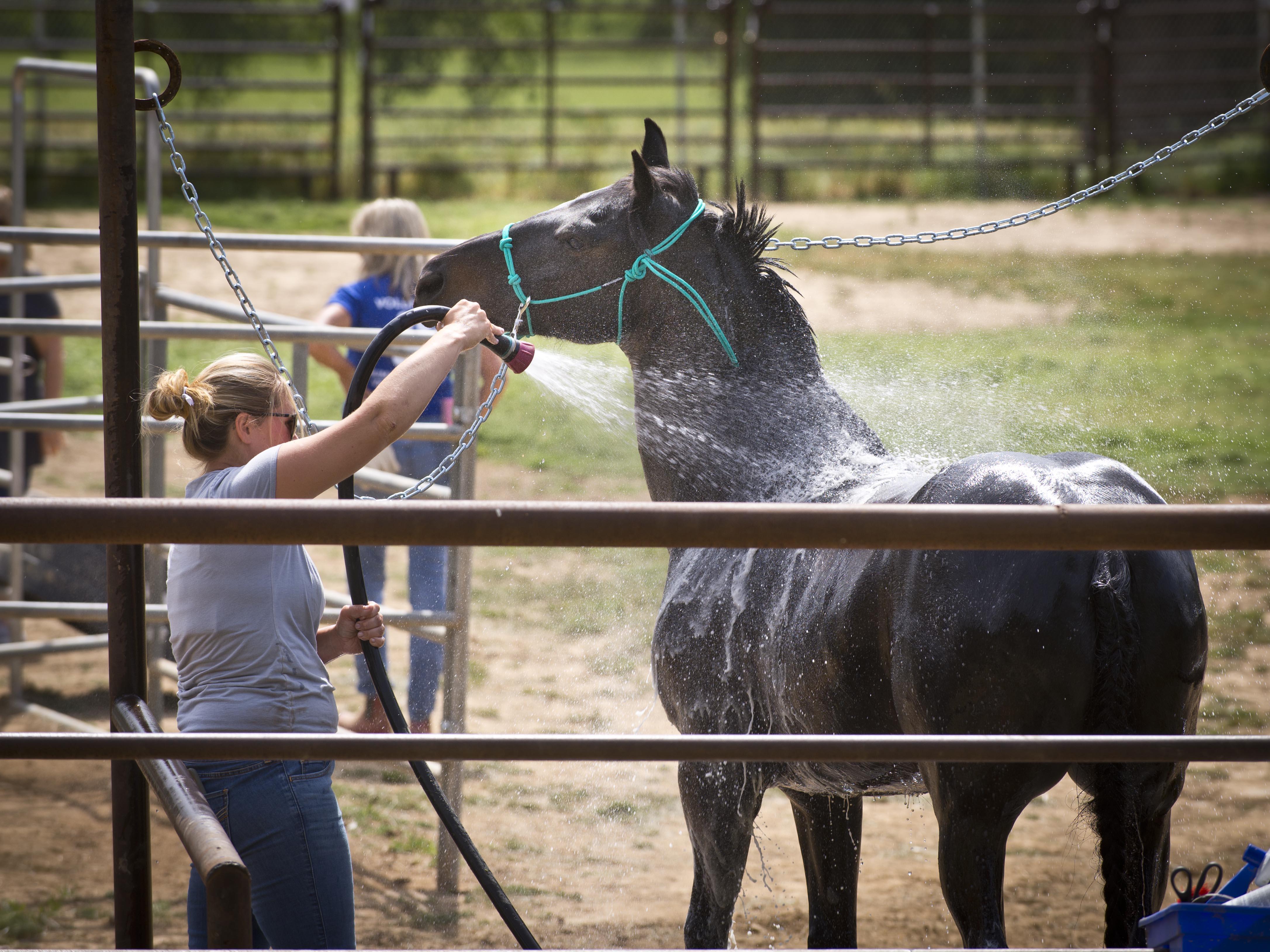 Horse_Wash04.jpg