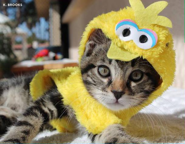 kittycostume.jpg