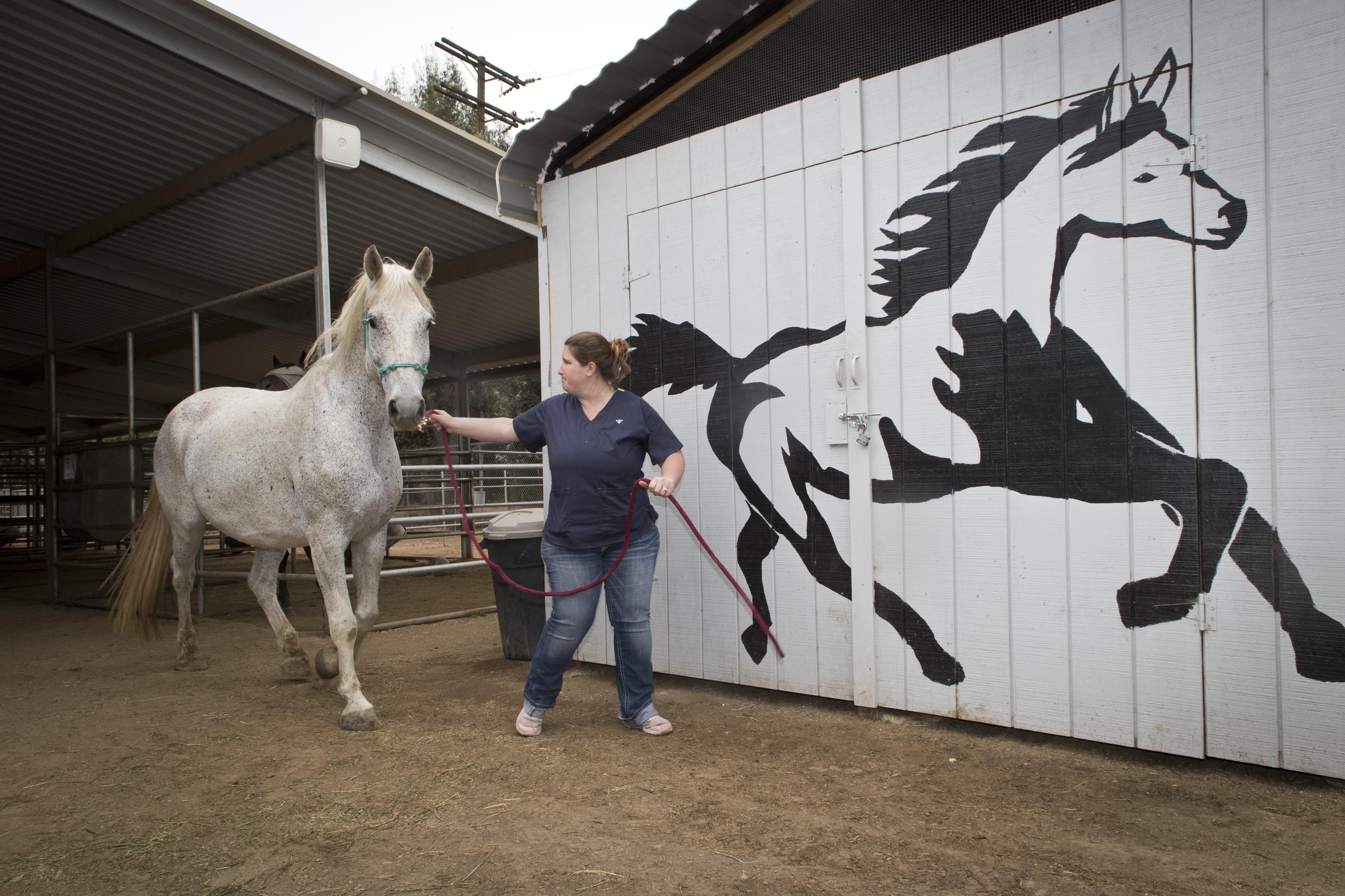 Peterson_Horses02.jpg