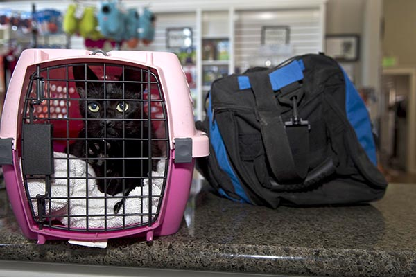 In the event of an earthquake or other emergency, the HSVC stresses the importance of having a go-bag and portable crate for each pet in your household.