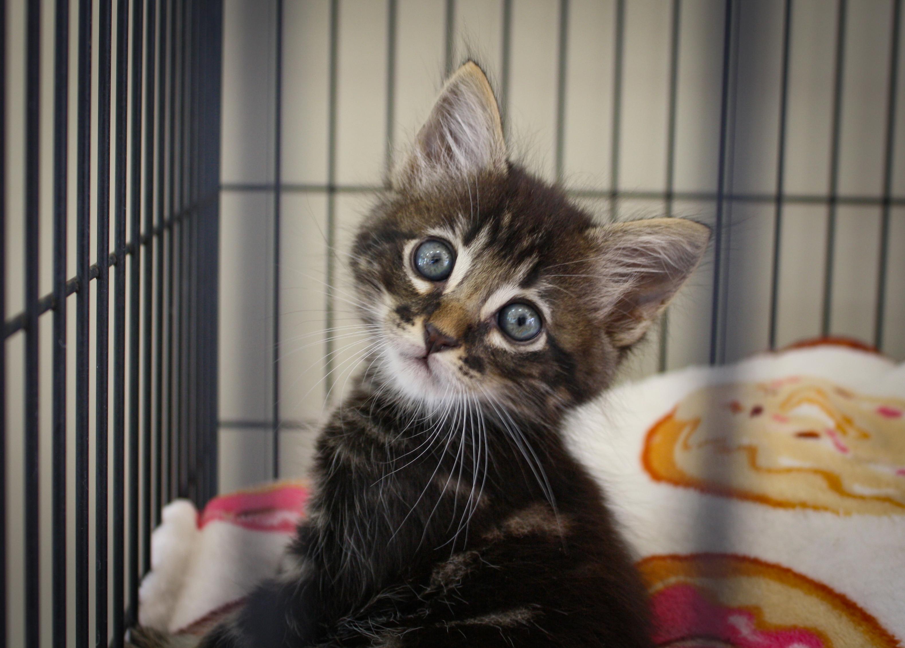 kitten.ww.jpg