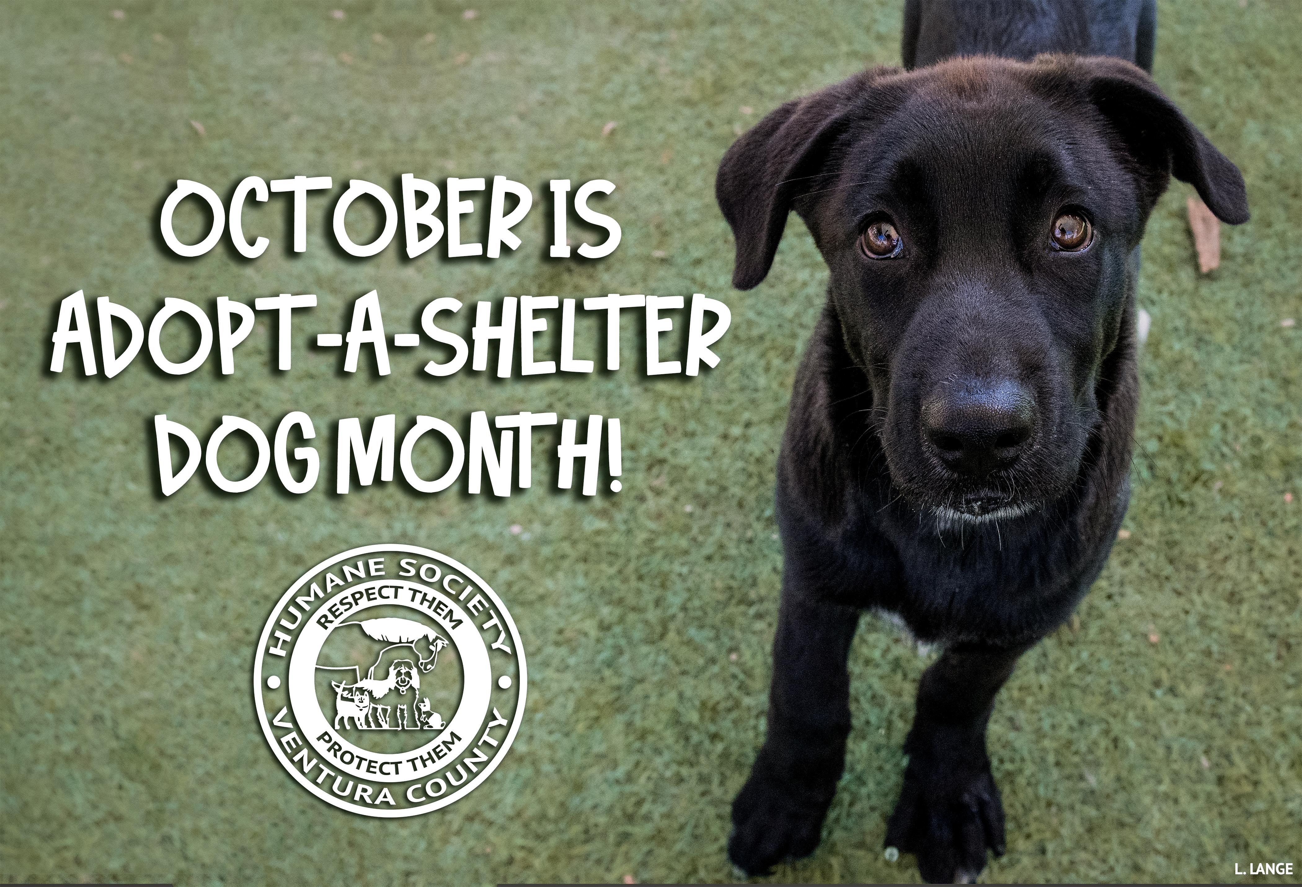 shelter_dog_2019.jpg
