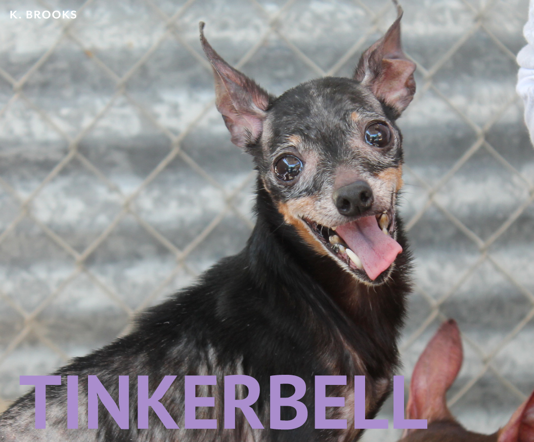 tinkerbell2_copy.jpg
