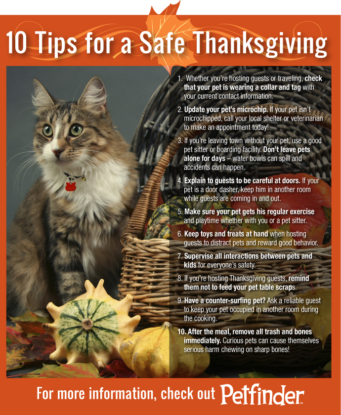 cat-thanksgiving-10-tips.jpg