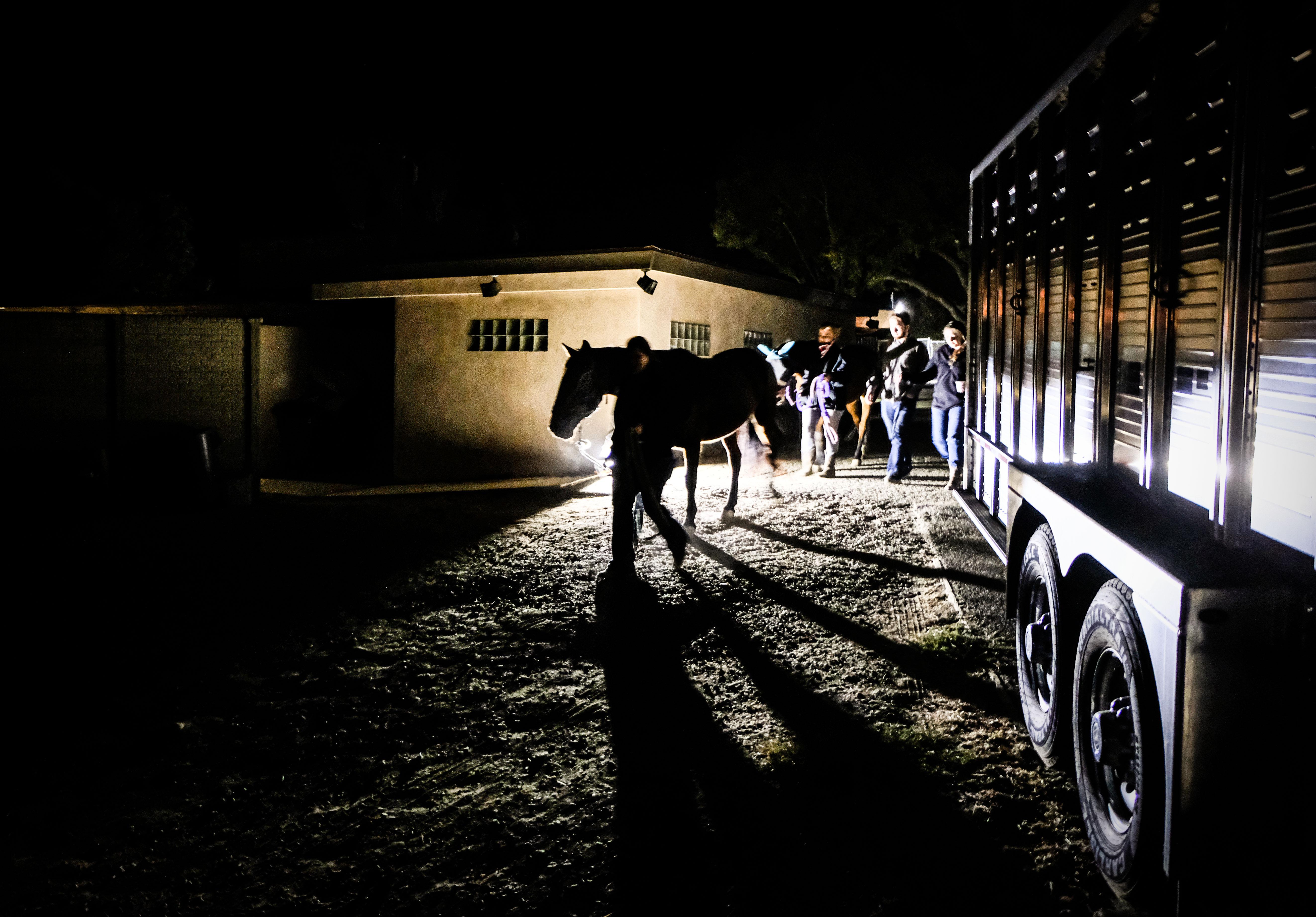 trailer_horse.jpg