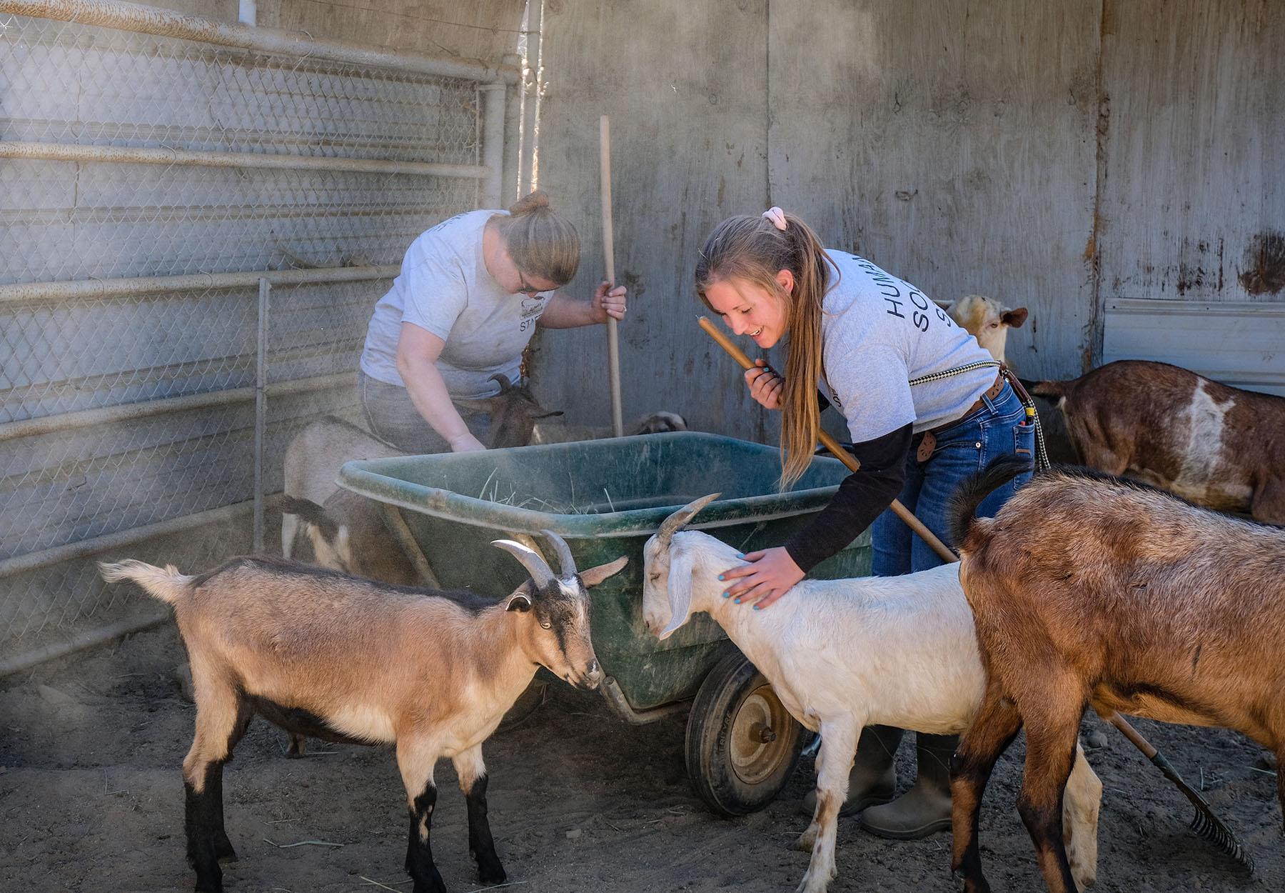 staff_goats.jpg