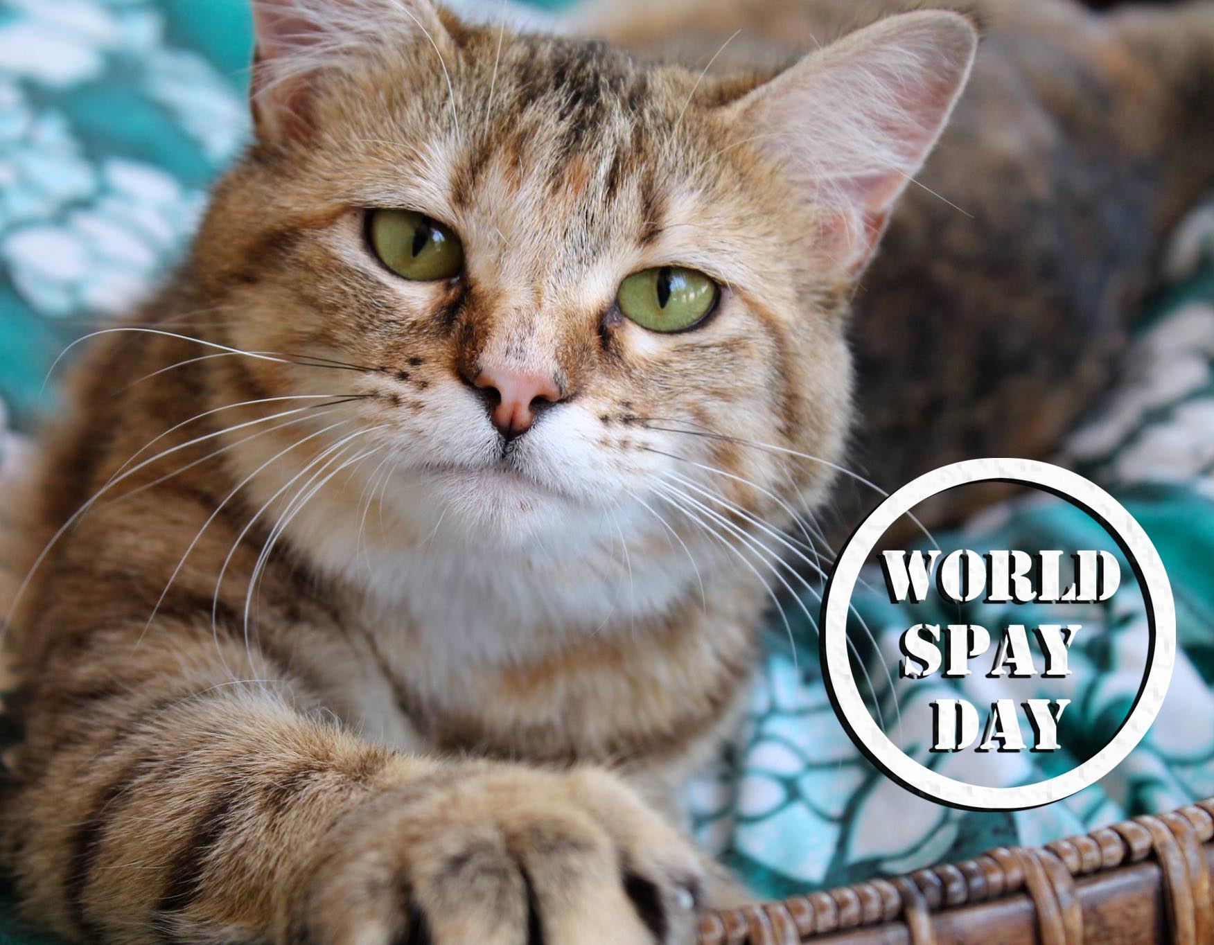 WORLD_SPAY_DAY.jpg