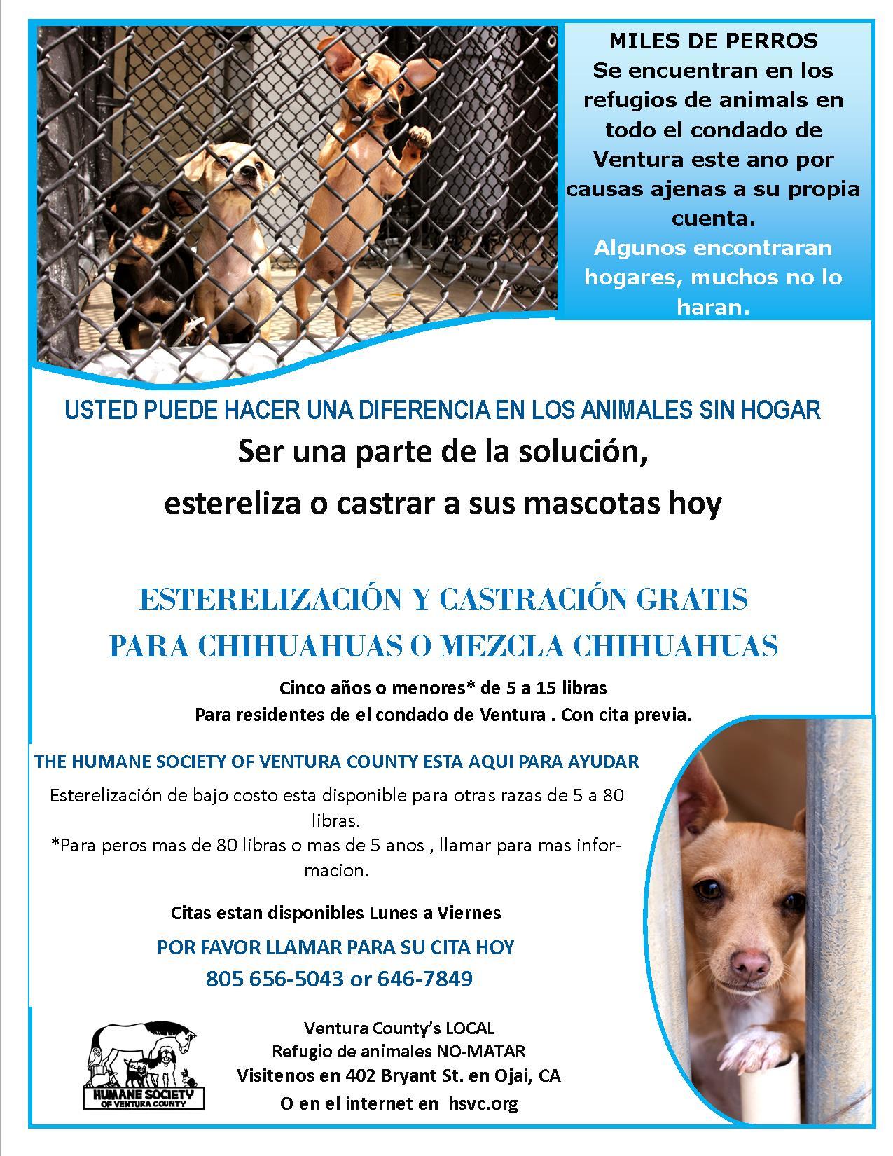 Chihuahua_Spay_Neuter_flyer_Spanish.jpg