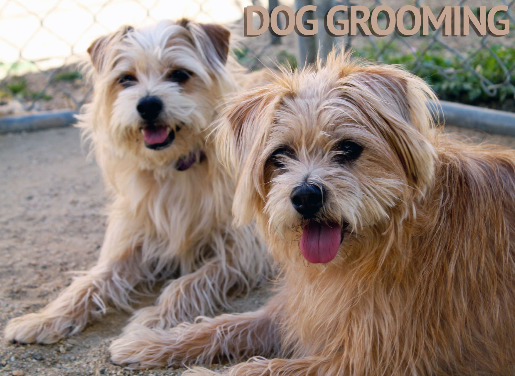 DOG.grooming.jpg