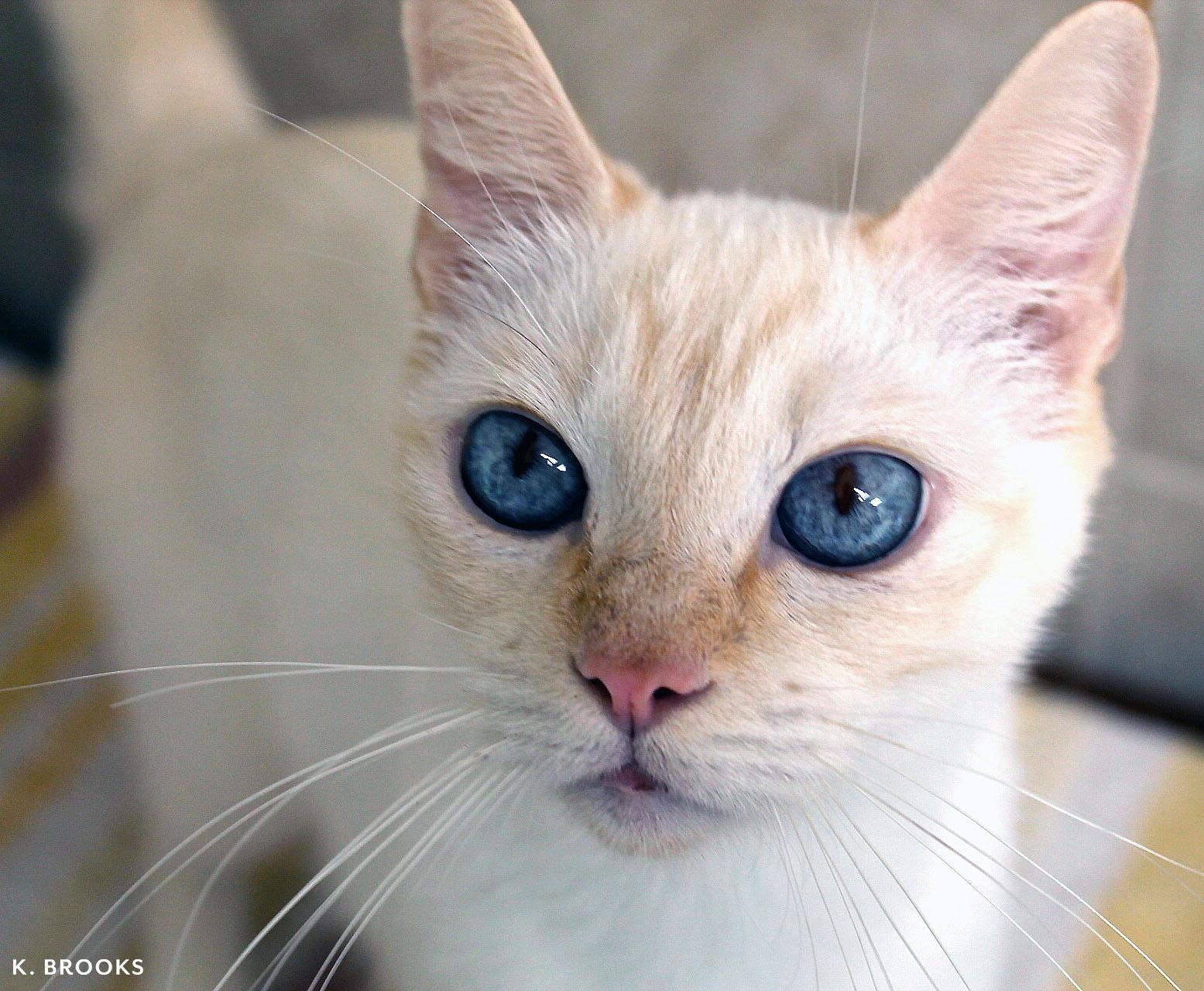 emma.cat.jpg