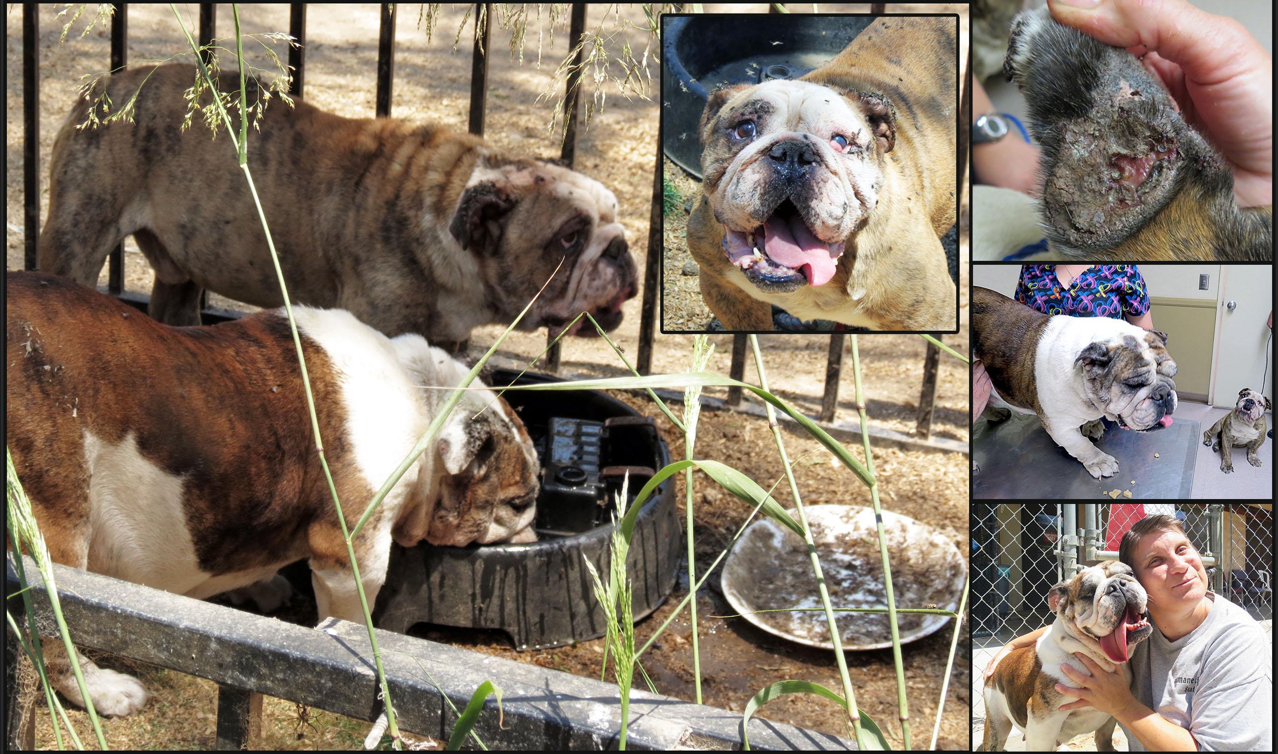 bulldogs.222.jpg