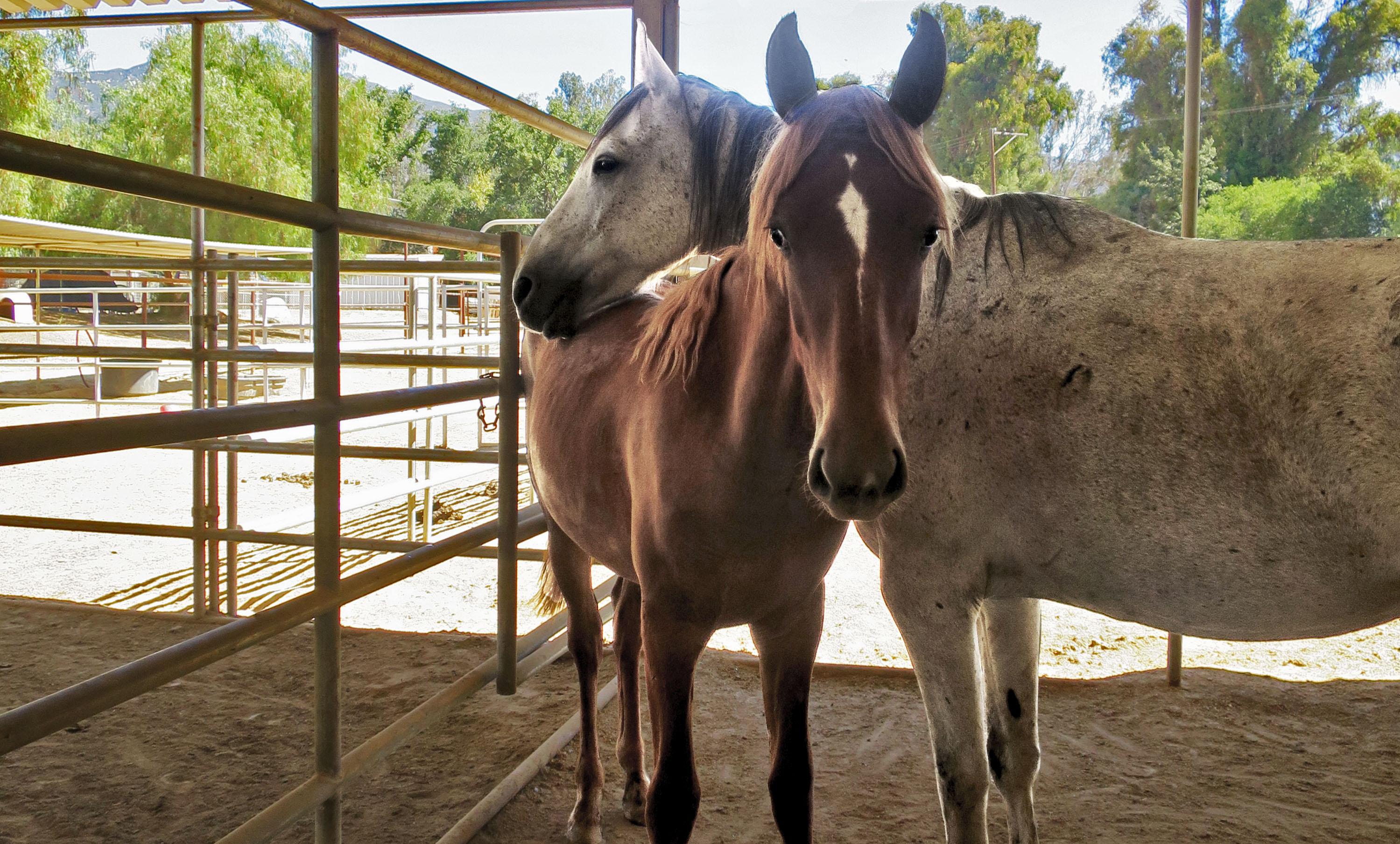 horse.fdf.jpg