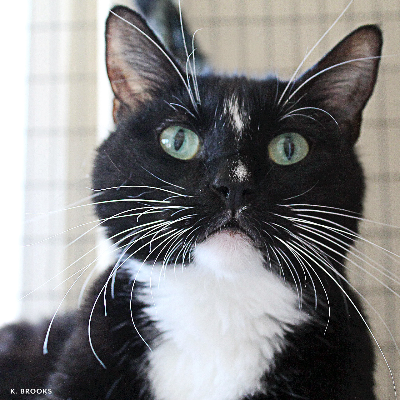 onyx.cat.jpg