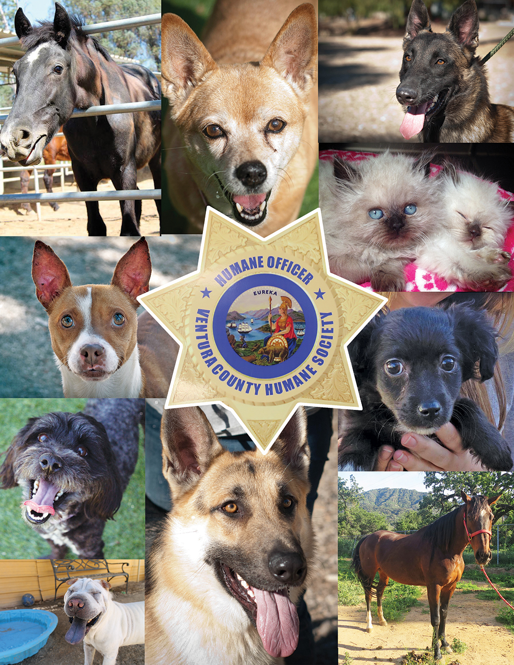 animals.saved.by.officers.small.cmyk.jpg