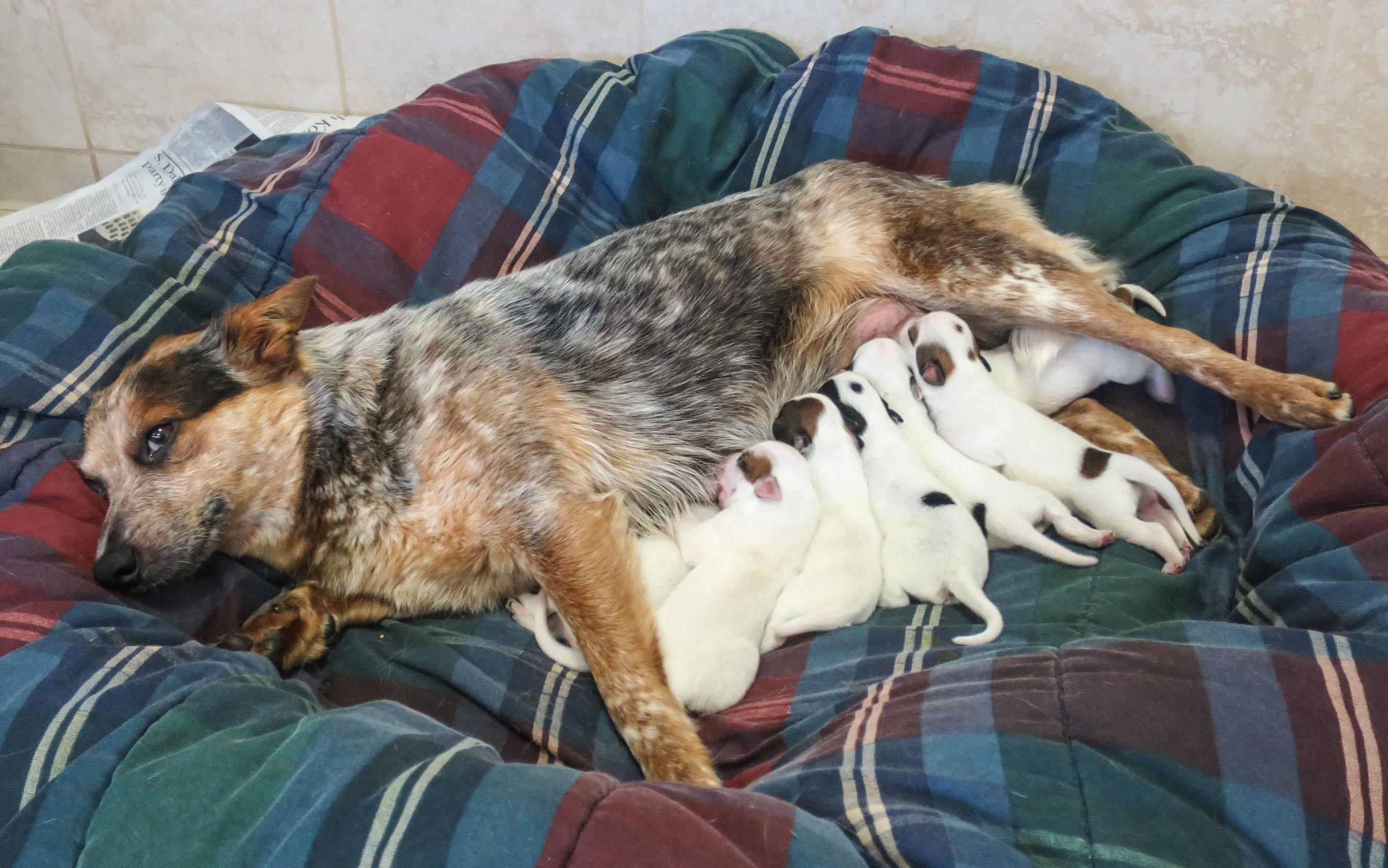 foxy.pups.jpg